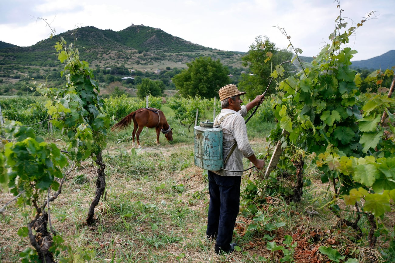Wine production in Georgia dates back to around 6000BC – and the wines from the region have become a fixture on trendy wine lists around the world. Photograph: David Levene for the Guardian