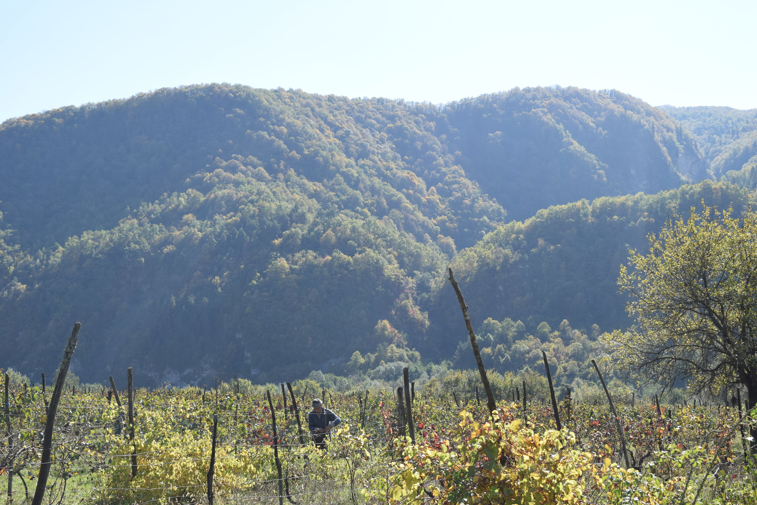 Vineyard high up in the Racha mountains, Western Georgia. Makes unique and rare wines. Tendered by local farmer.