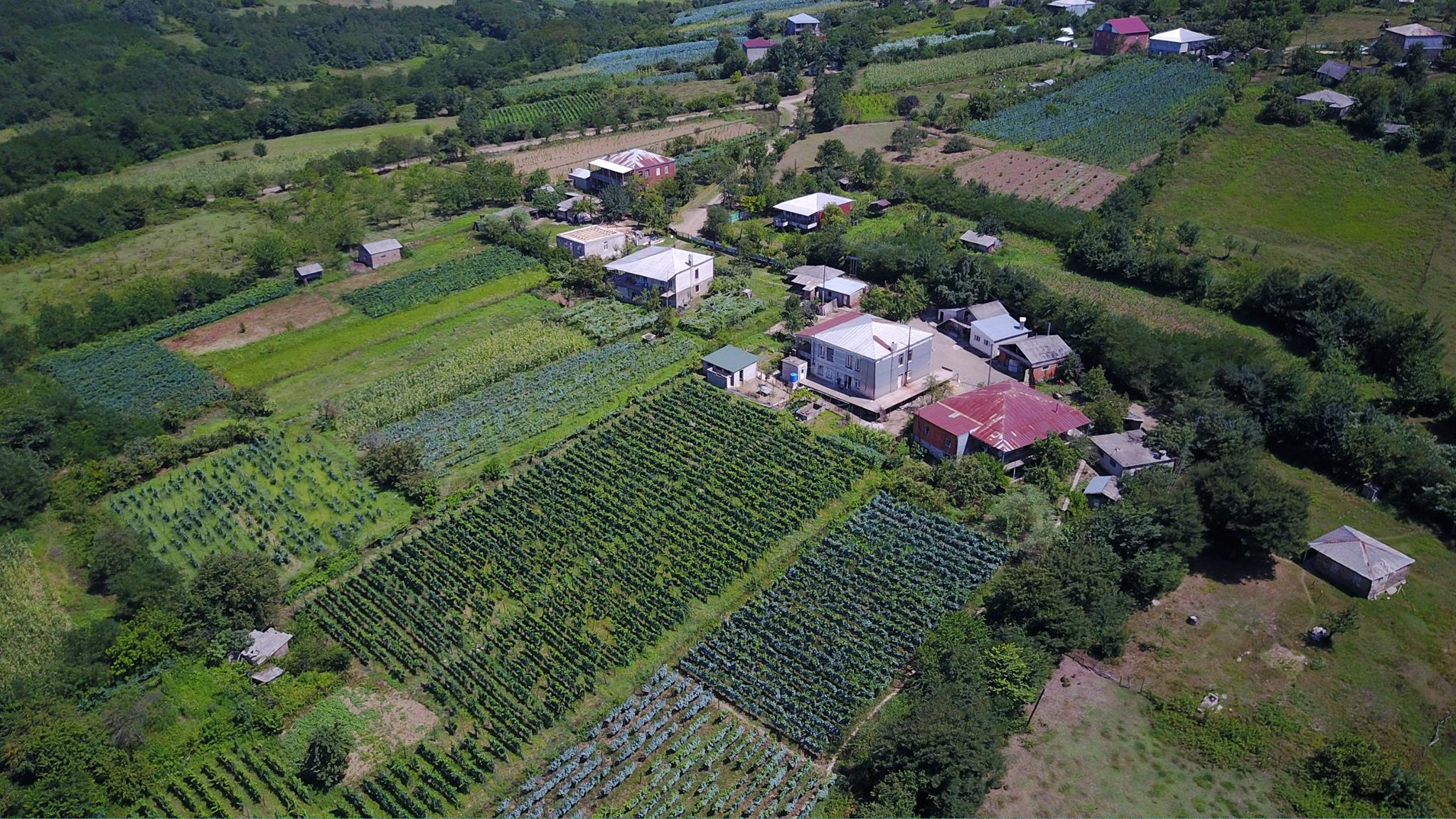 An overview of Baia's organic vineyard growing Tstitska, Tsolikouri and Krakhuna grapes for white, amber and orange Georgian wine
