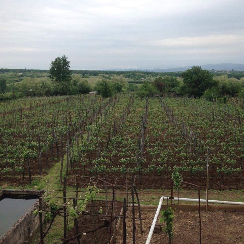 Overlooking Baia's Wine vineyard. Organic red and white wine is made here.