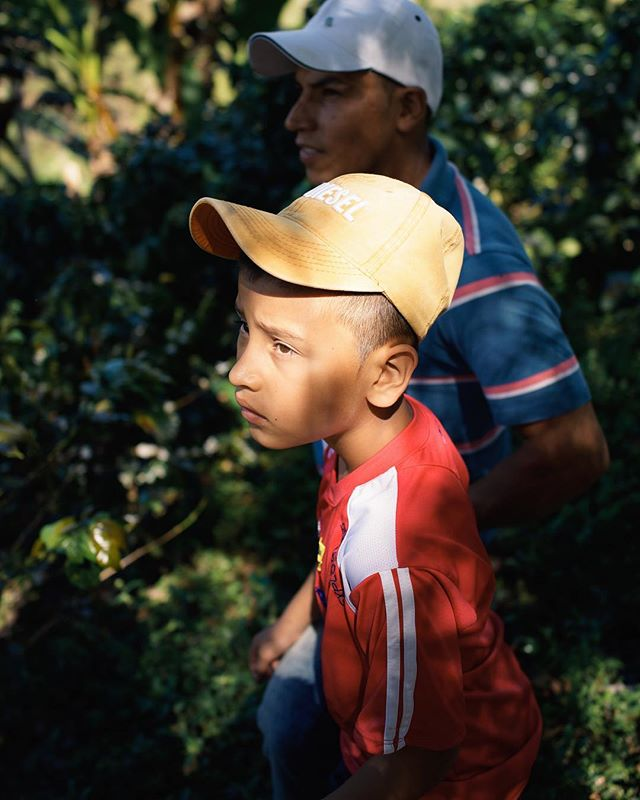 in the sun after the rain... . A young farmer stands next to his father among their coffee trees on a lush hillside of Colombia. @ironsmithcoffee had the privilege to be among other roasters to experience the origin of the product they move.
