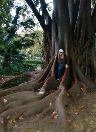 spain tree.jpg