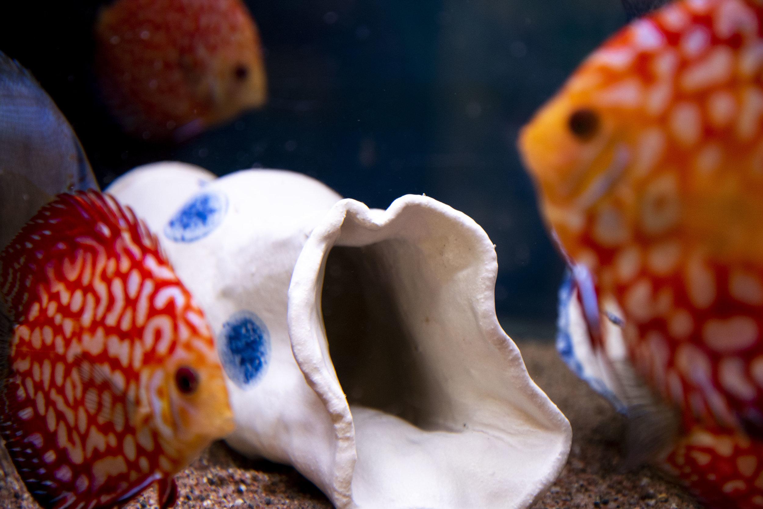 UnderwaterEdition_19111846.jpg