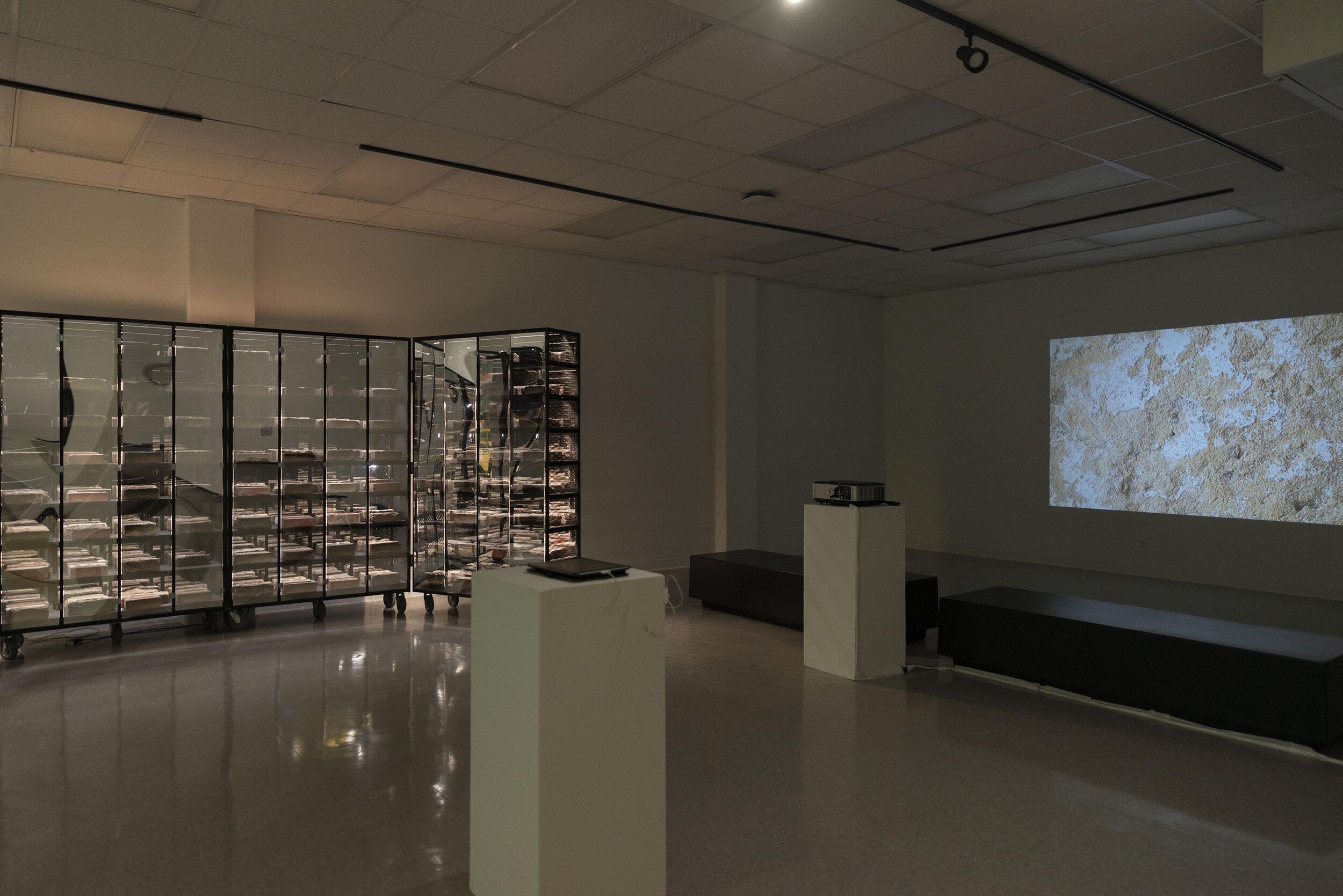 Houston Brick Archive Alexander Squier