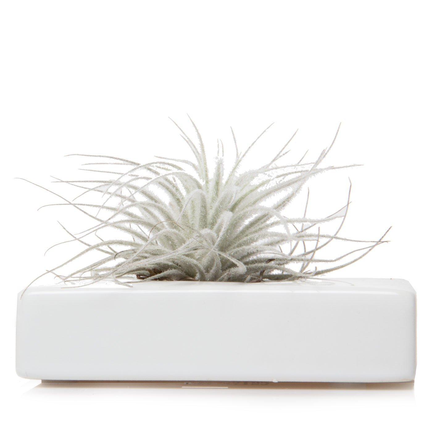 Chive - Swayzak Ceramic White Rectangle Flower Vase