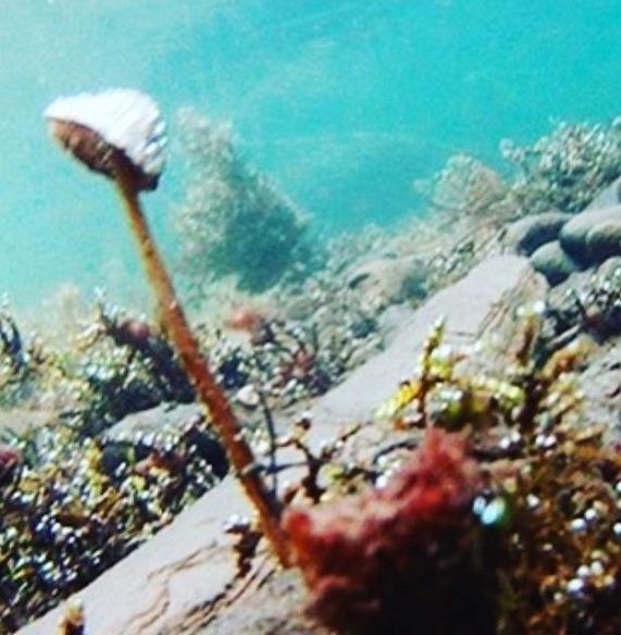 Underwaterfungi.jpg