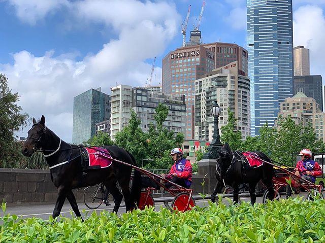 Fantastic to have @hrvhero horses Smudge Bromac & Waikari Aristocrat playing a part in this morning's Breakfast Of Champions Inter Dominion Barrier Draw by the Yarra River.  Photo by HRV's Mick Howard #ID18