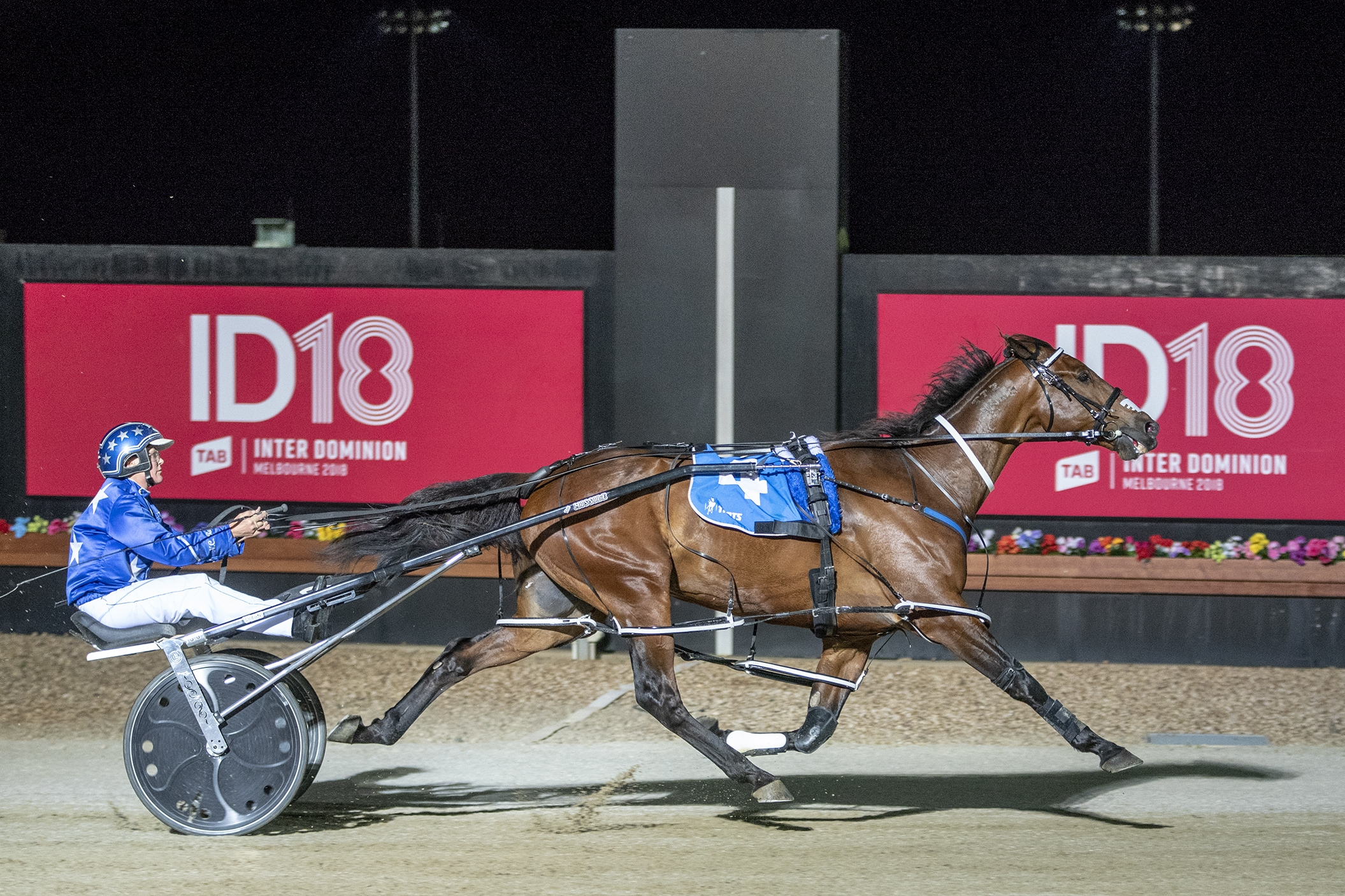 Another win for the All Stars as Natalie Rasmussen guides Cruz Bromac to an electrifying TAB ID18 first-round heat win at Tabcorp Park Melton.