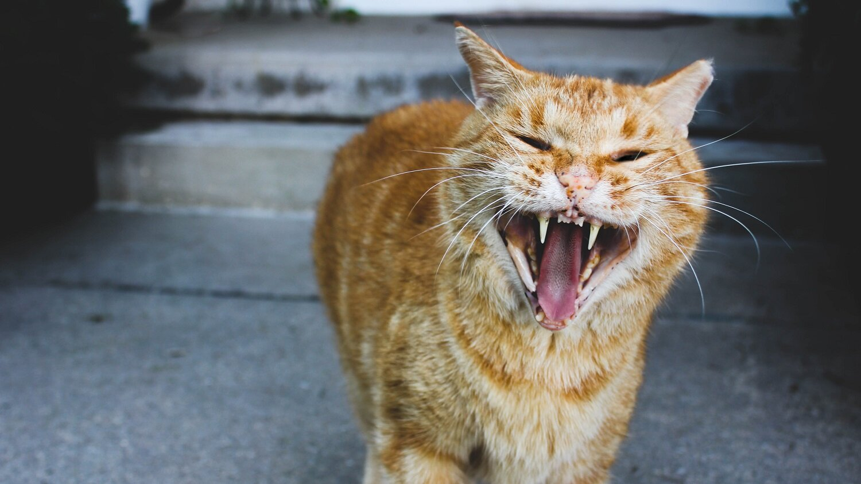 cat-1 - Copy.jpg