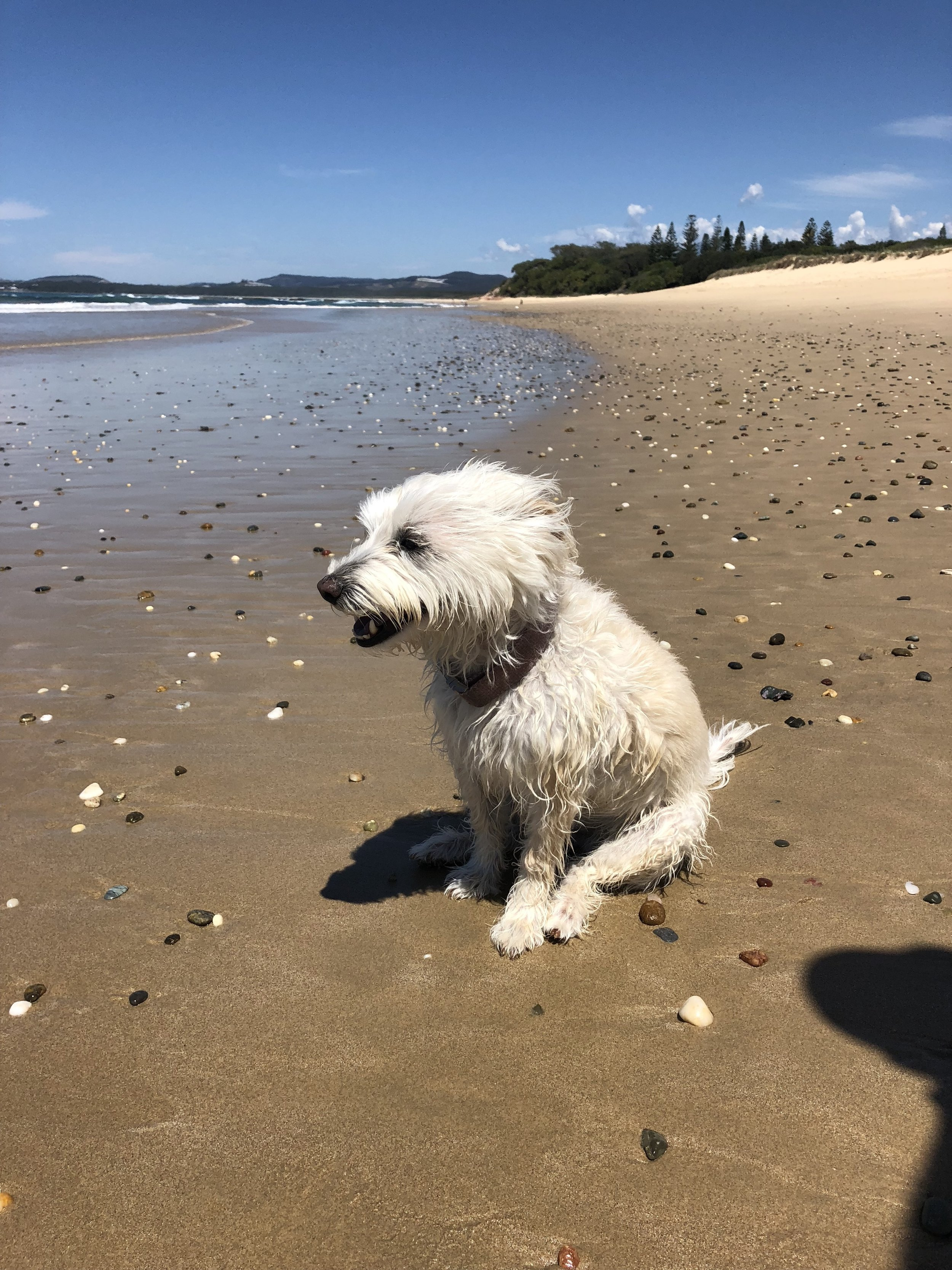 Sitting for Lucy atCorindi Beach, NSW, Australiafrom Sep 2018 for2 weeks and 5 days -
