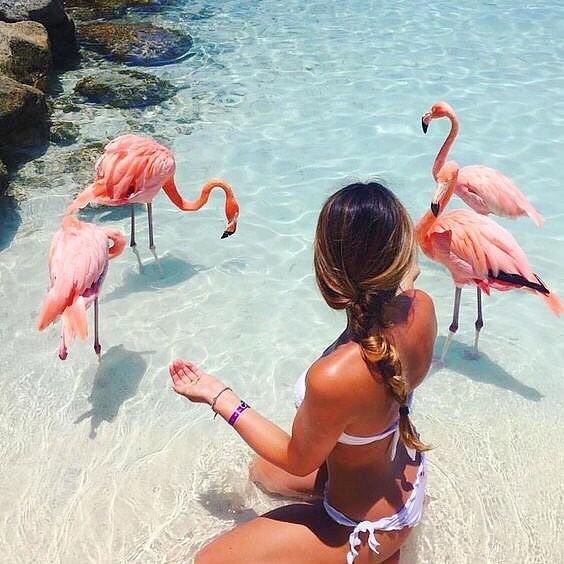 Fun fact: flamingos get their signature pink from eating shrimp #themoreyouknow🌈
