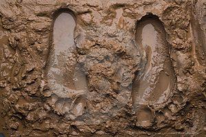 mud foot prints