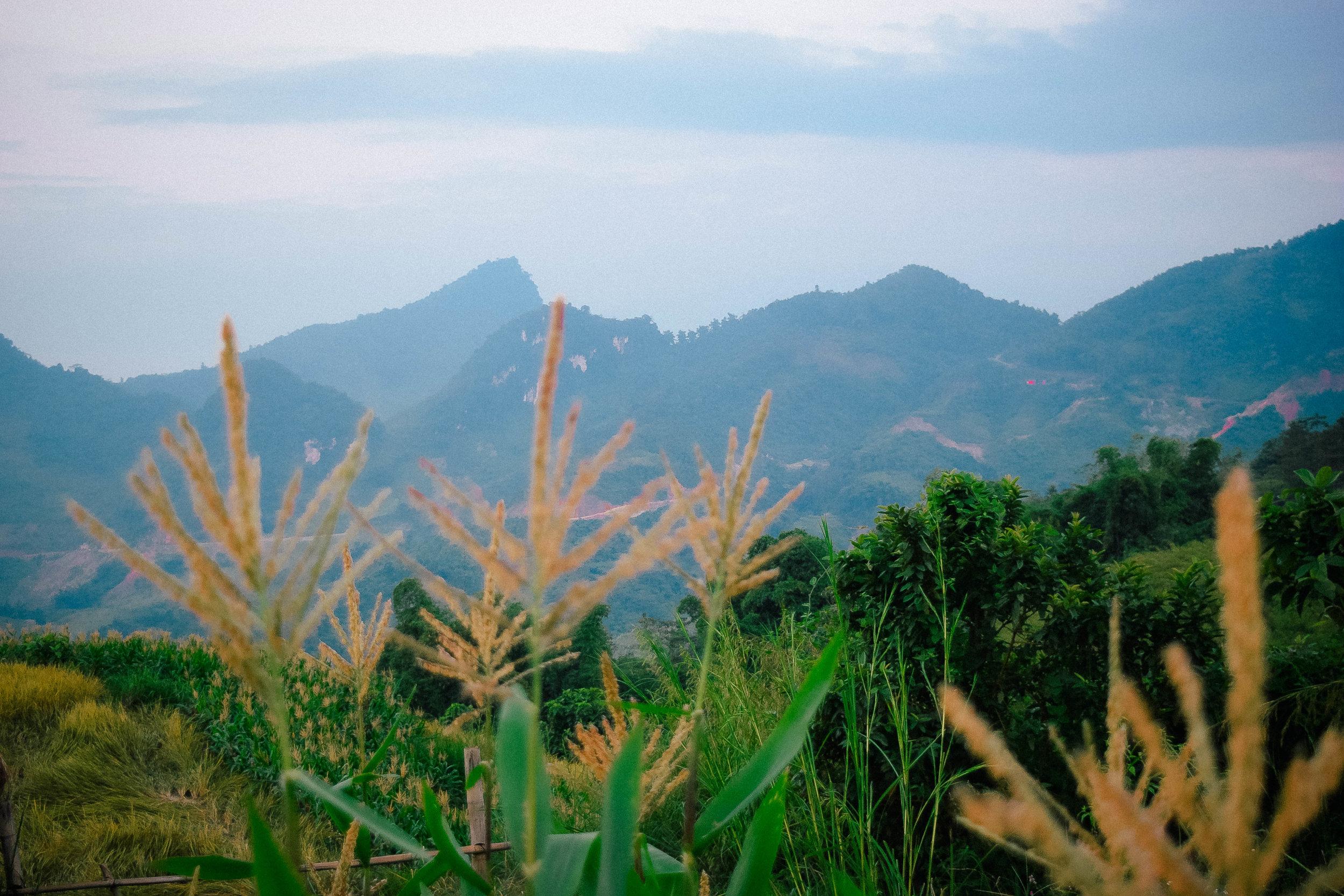 rice-field-sapa