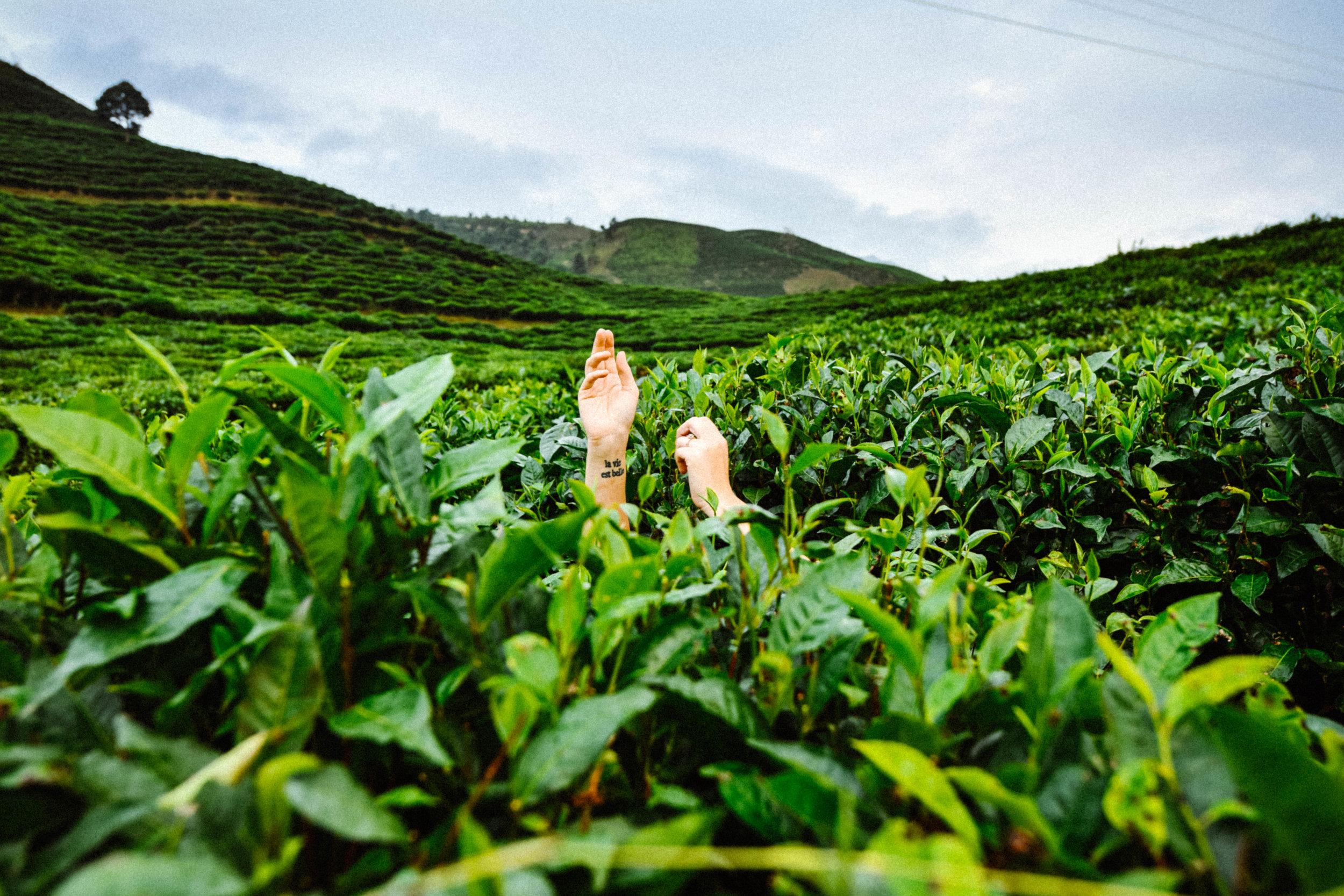 green-tea-vietnam.jpg