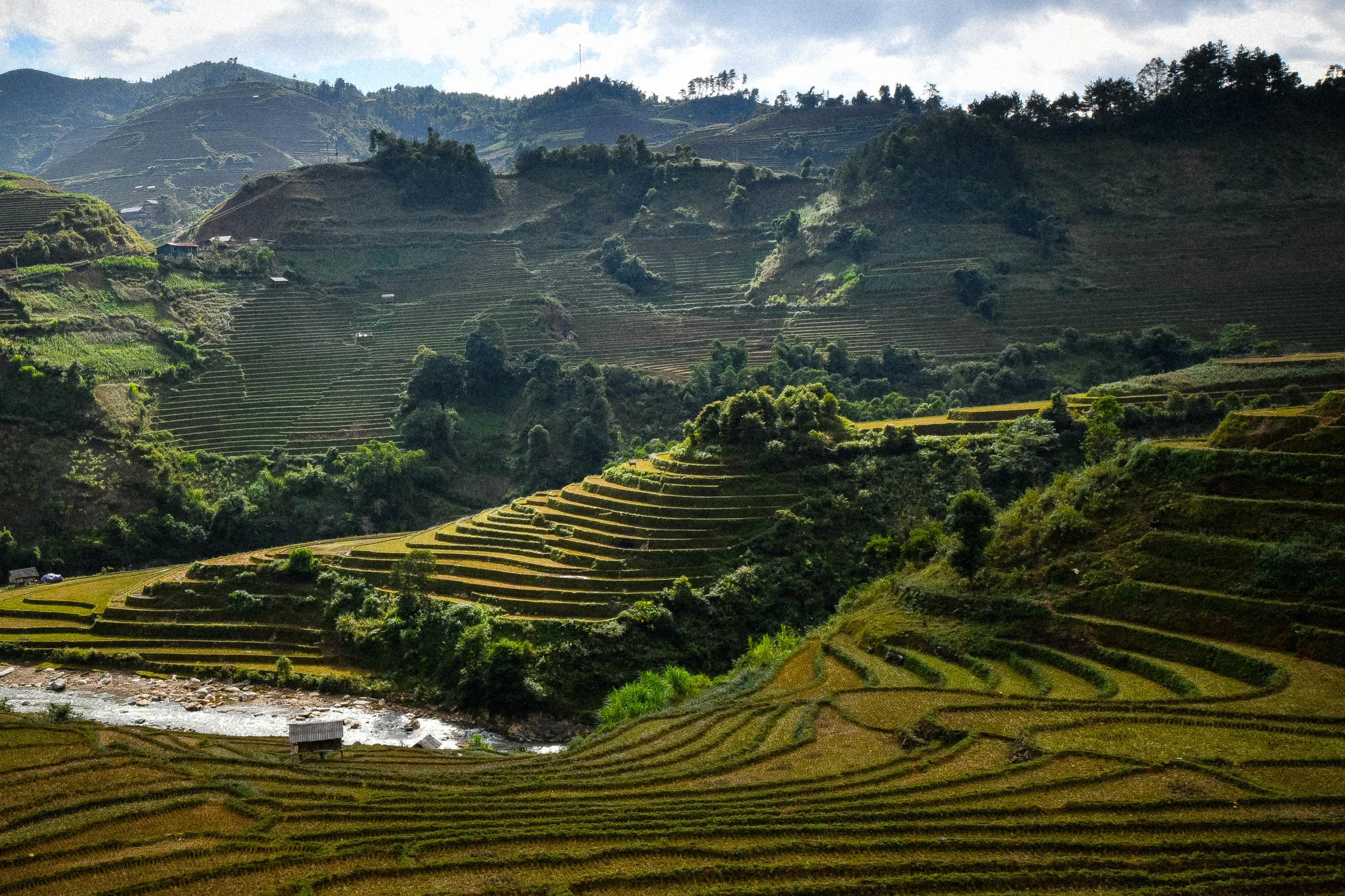 vietnam-rice-terraces.jpg