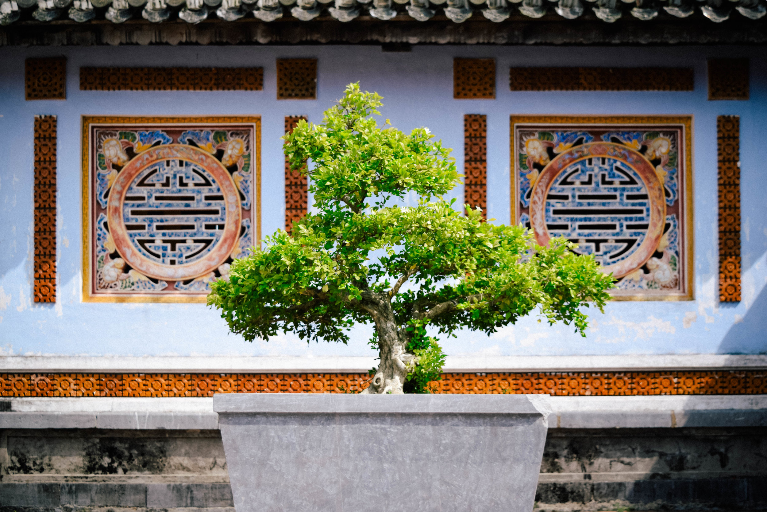 Bonsai tree in Hue
