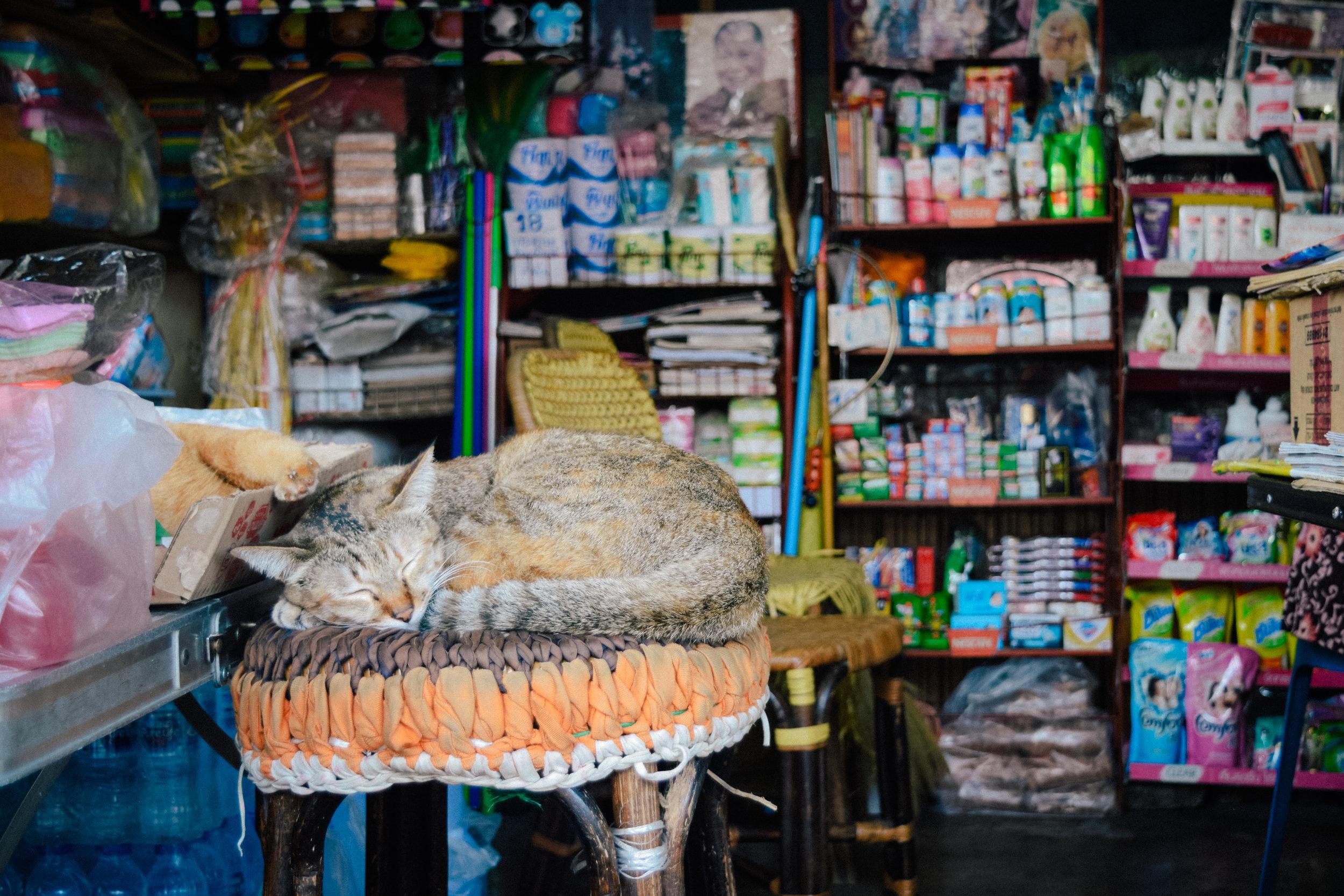 cat in thailand