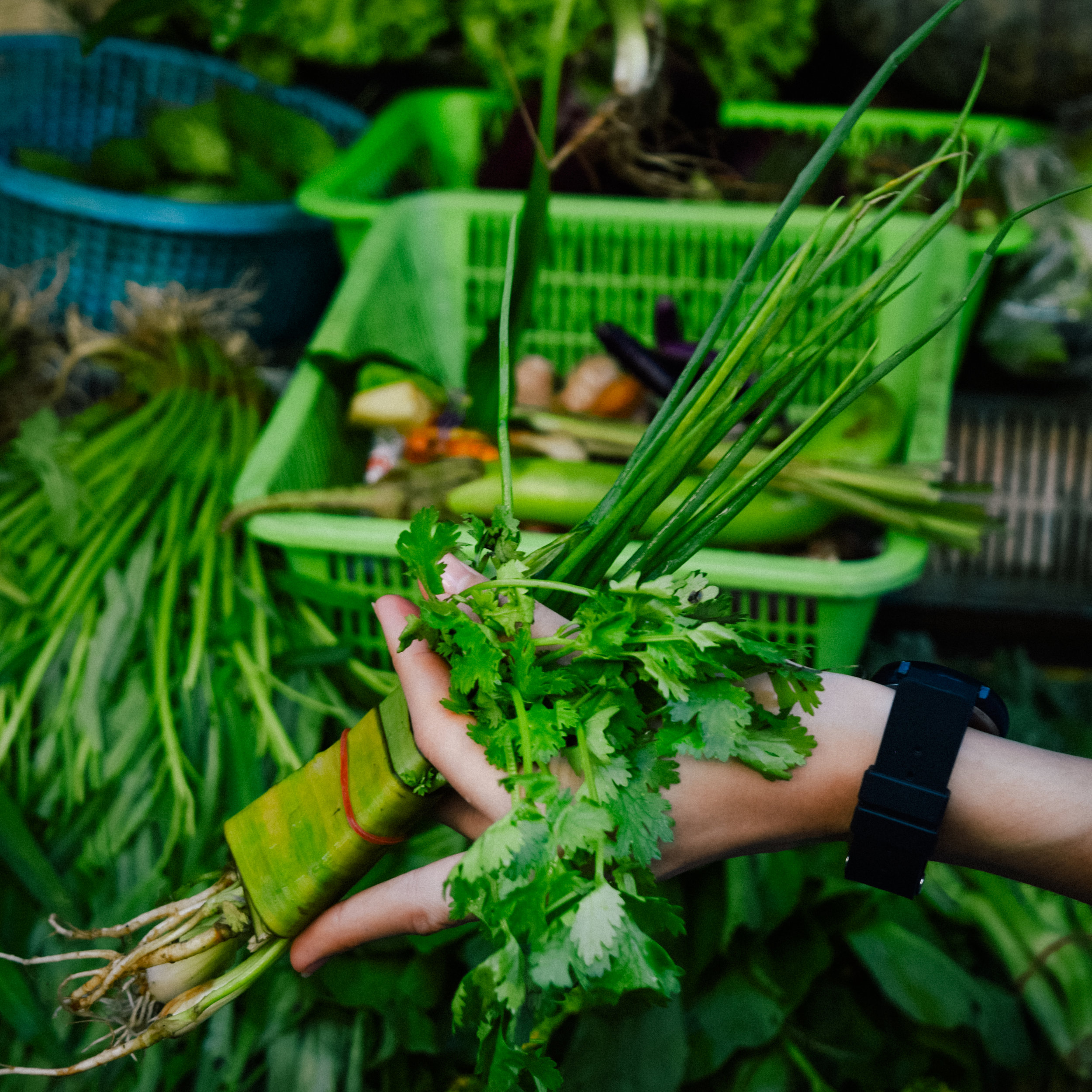 soup herbs in thailand