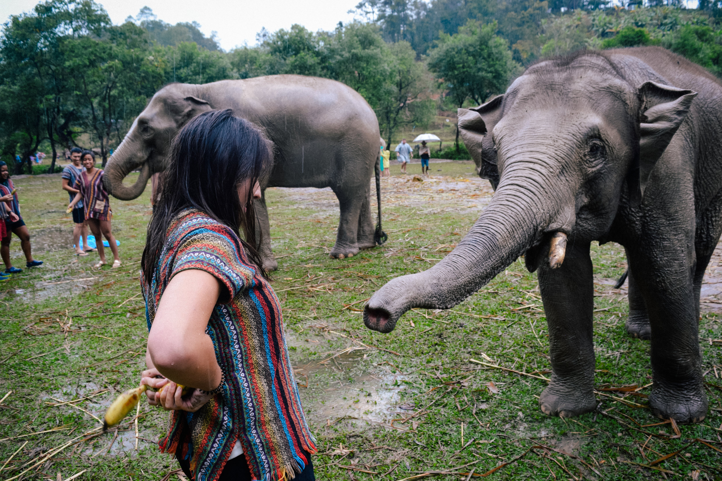 bananas reaching for the elephant