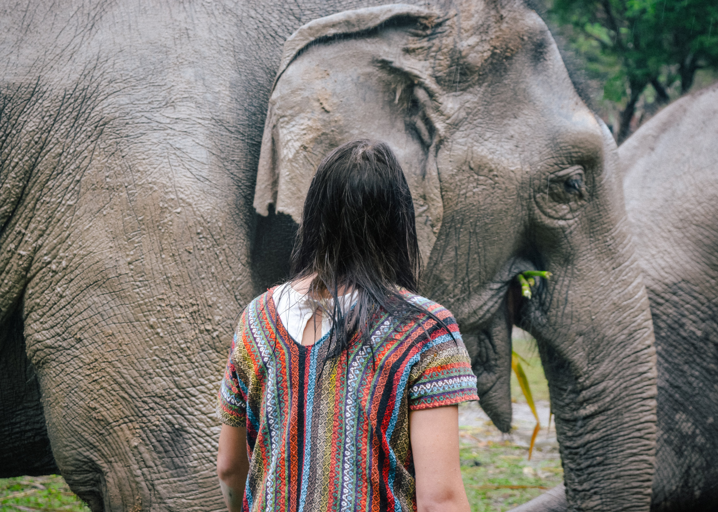 looking at an elephant