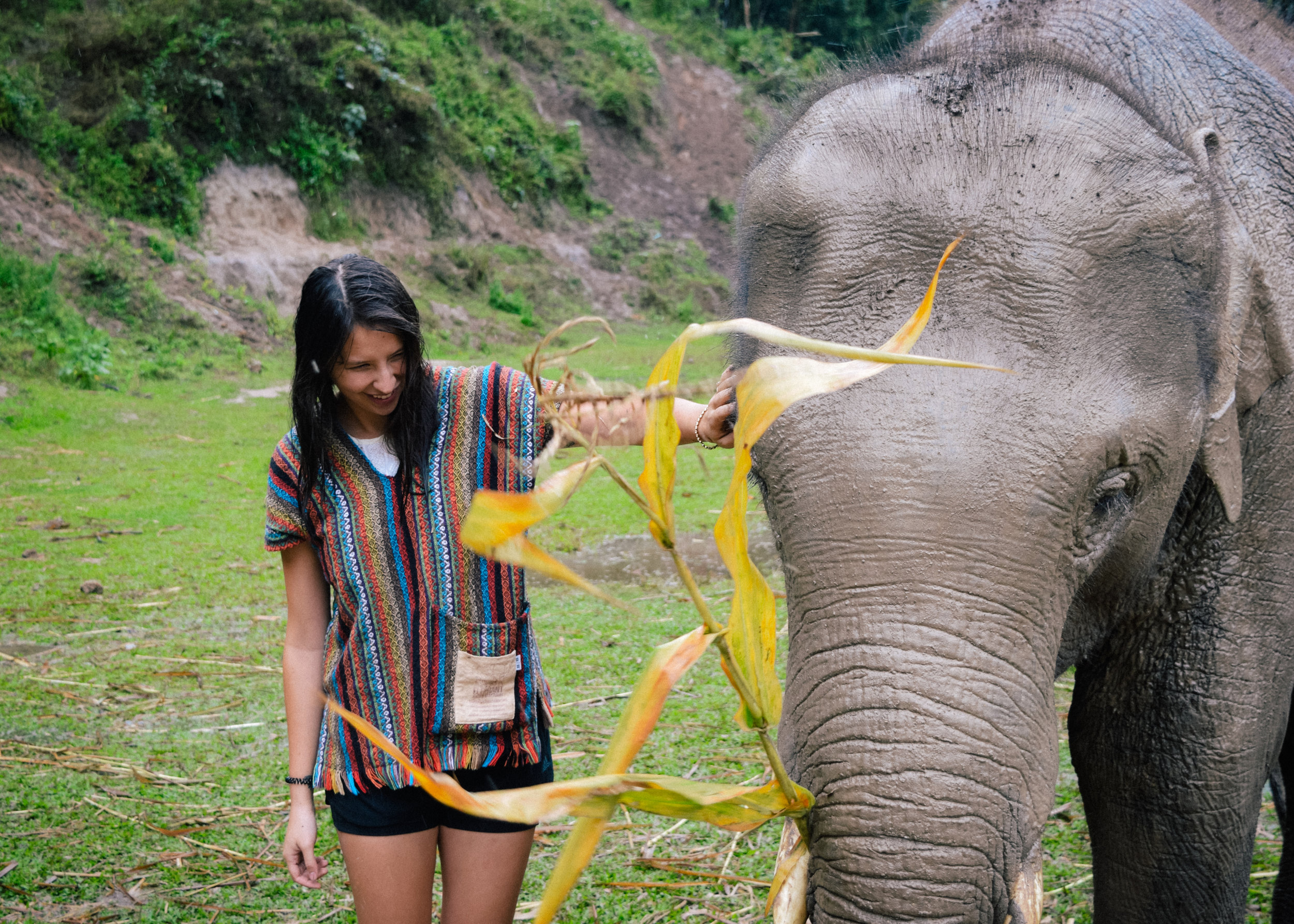 touching mr elephant