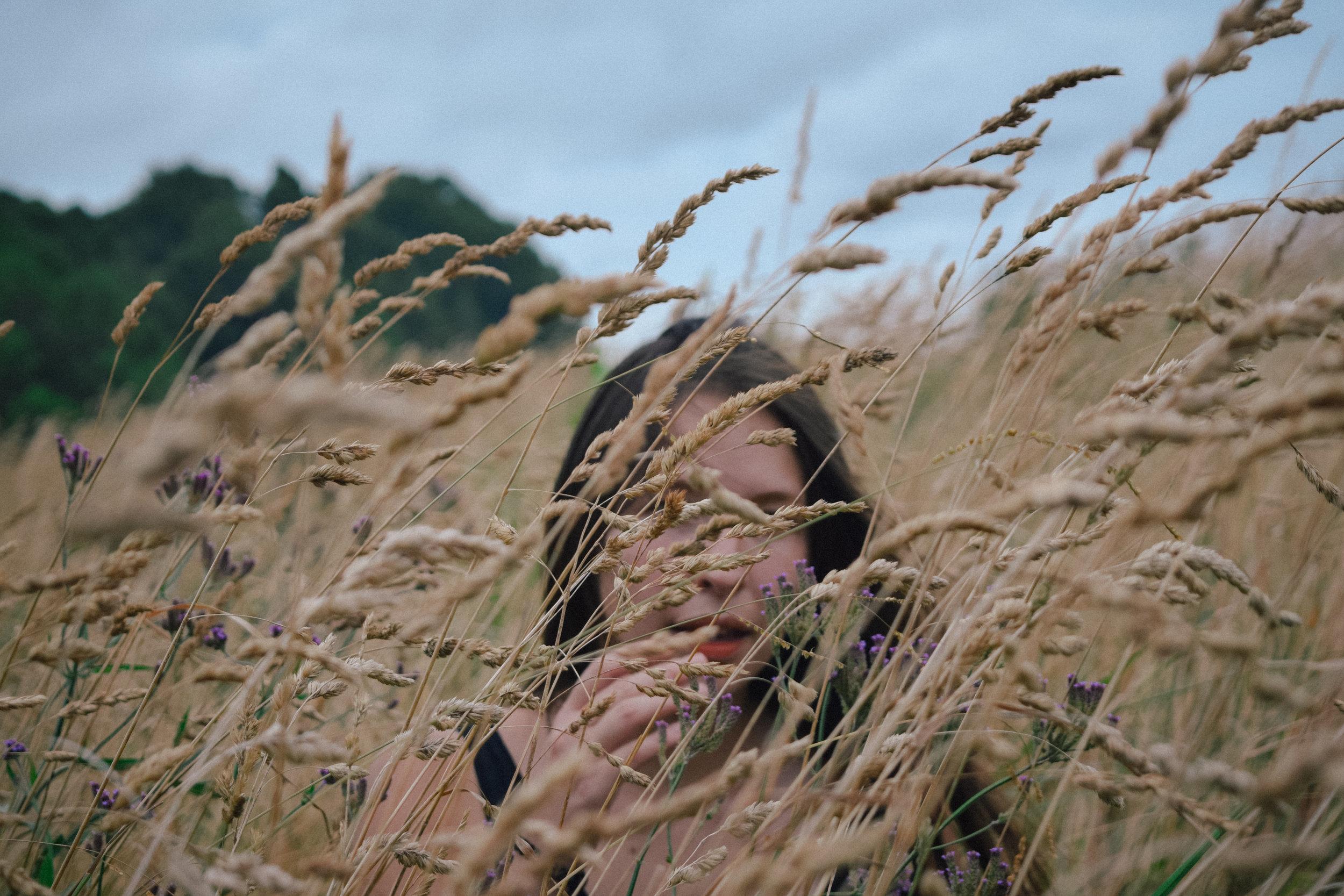 Wheat and wildflowers in Coromandel