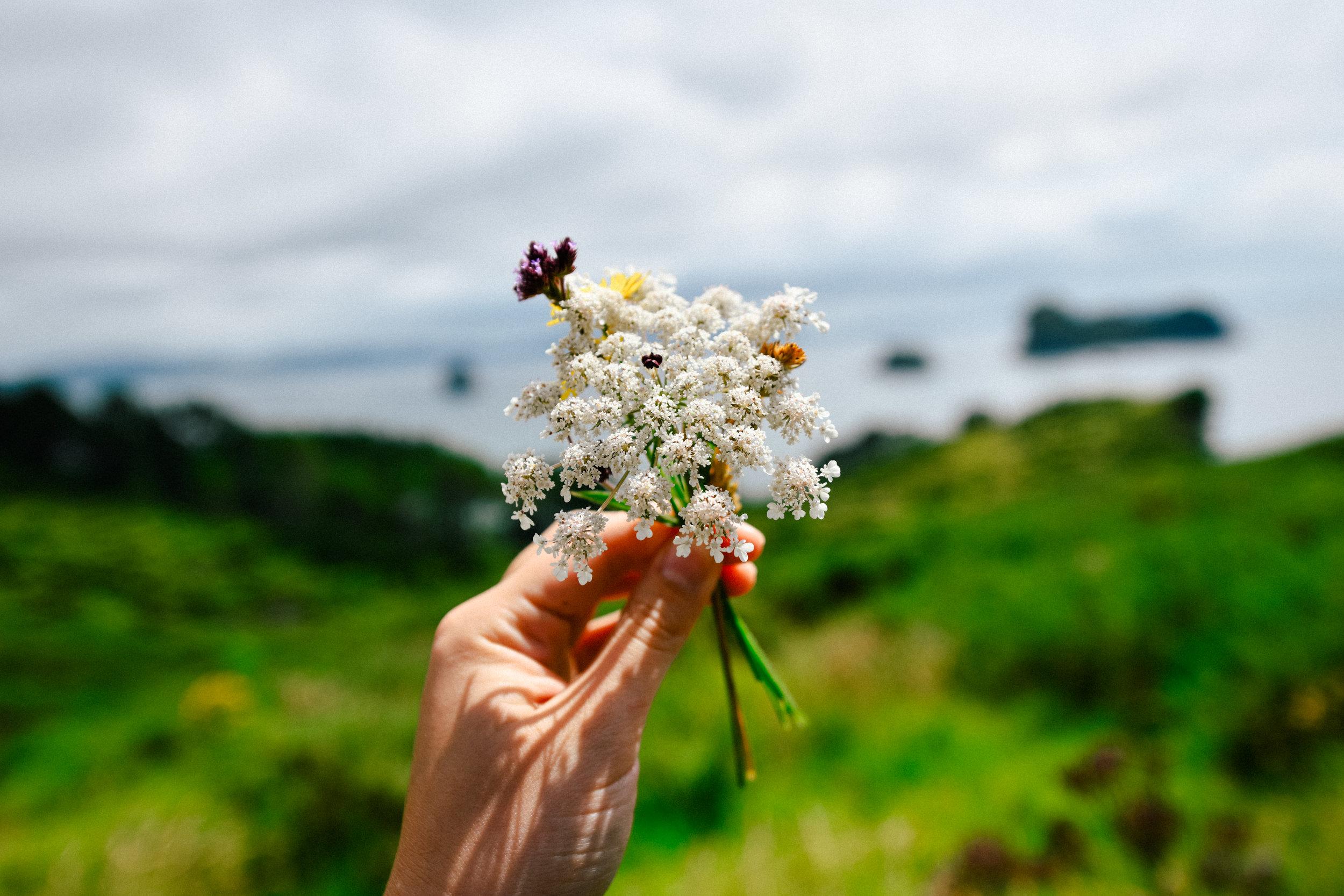 Wildflowers in coromandel