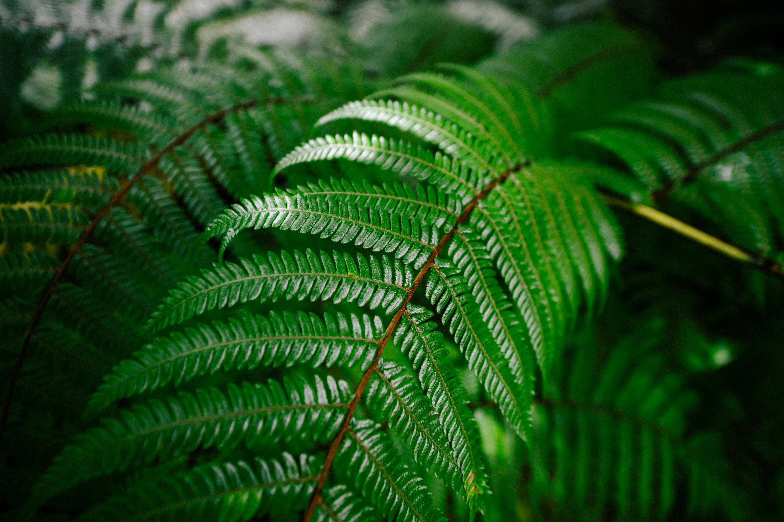 fern near Bridal Veil
