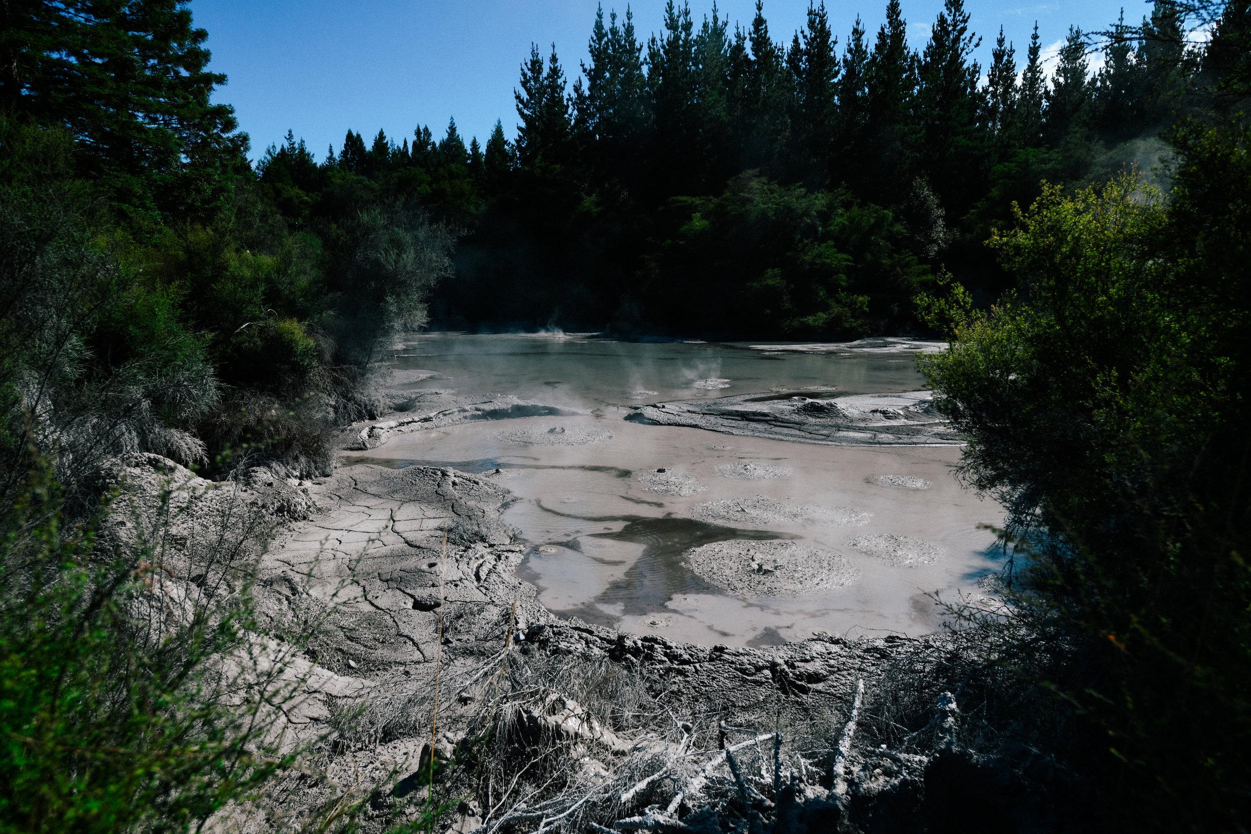 mud springs in Rotorua