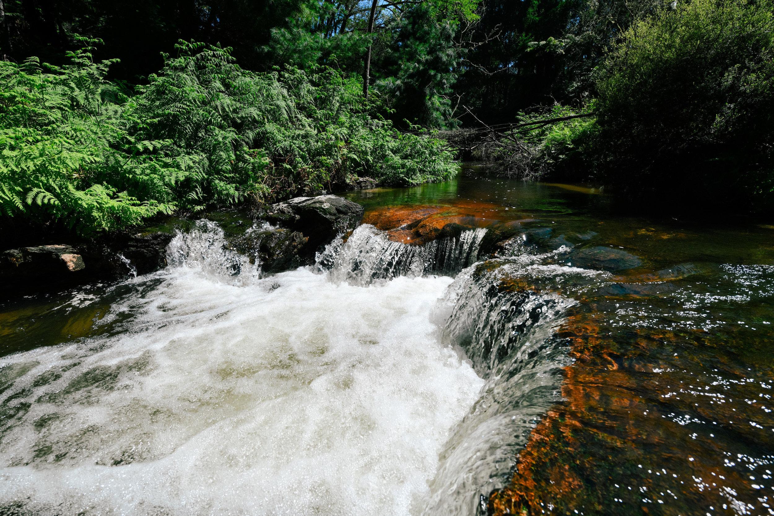 Kerosene creek in Rotorua