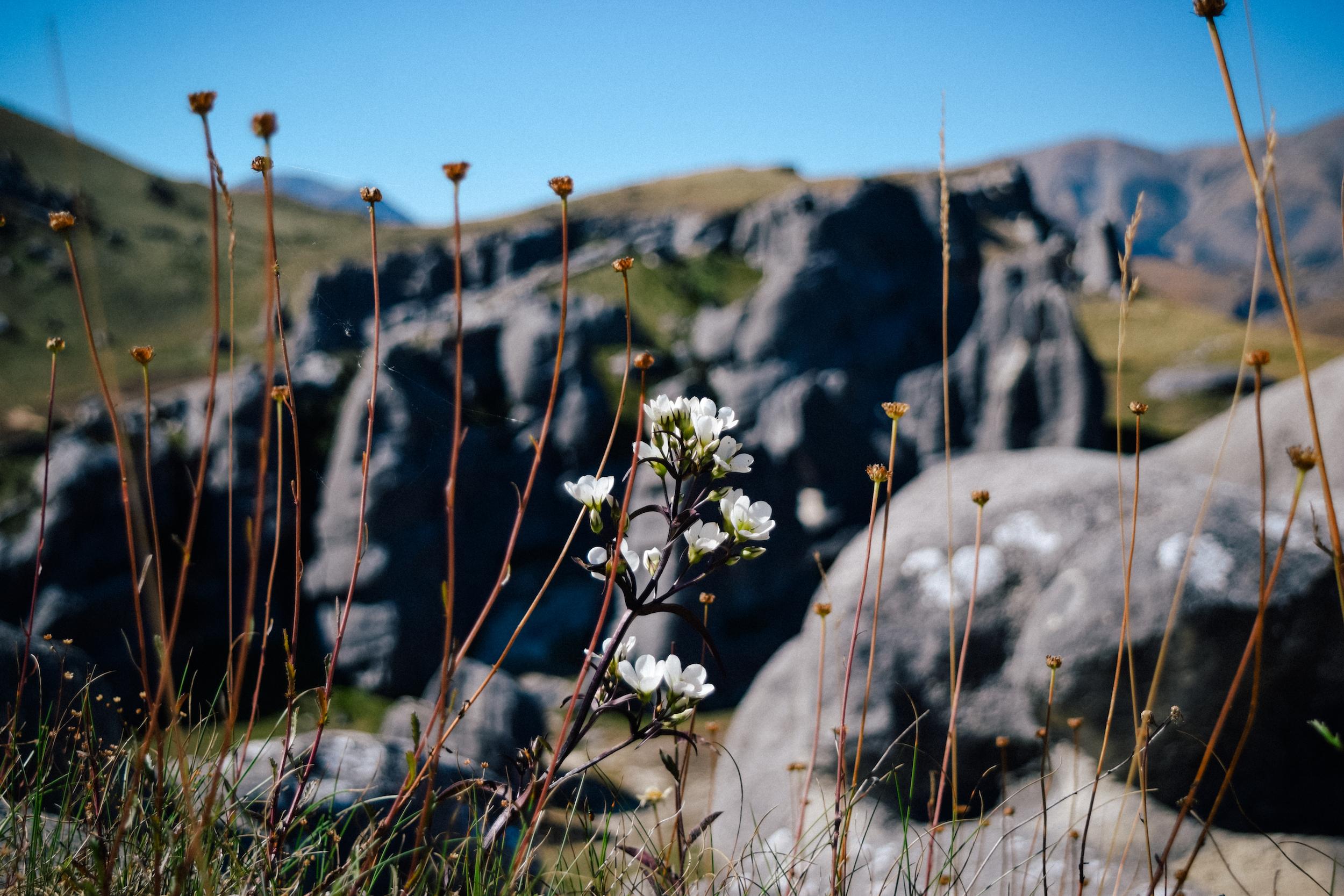 flowers in castle hill