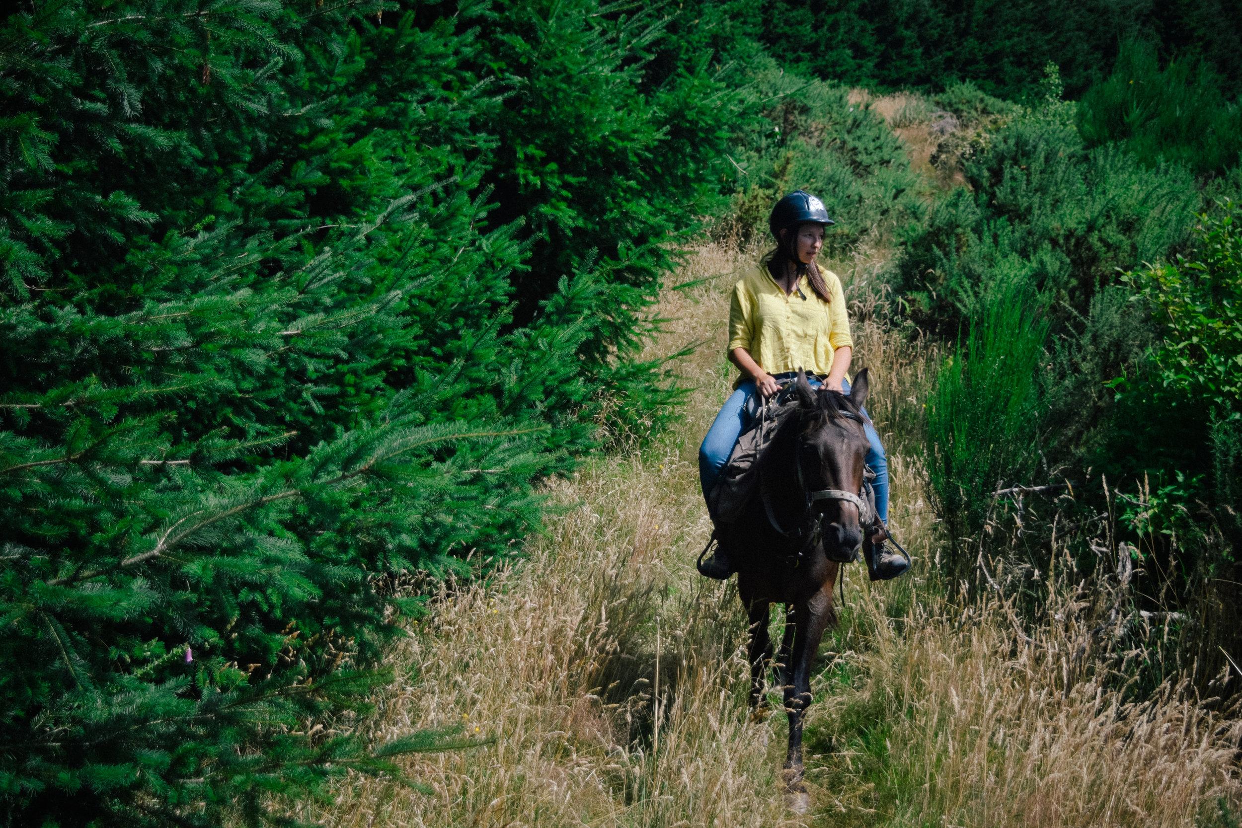 horseback riding in peel forest