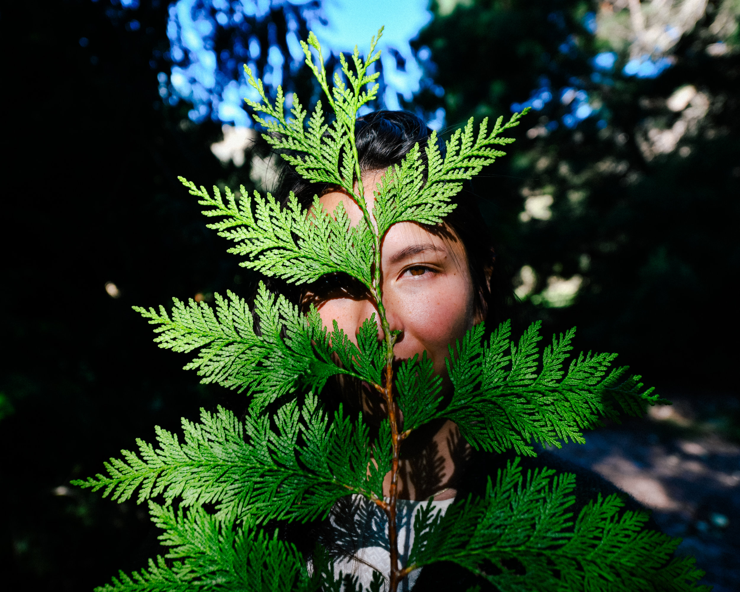 fern picture in my face