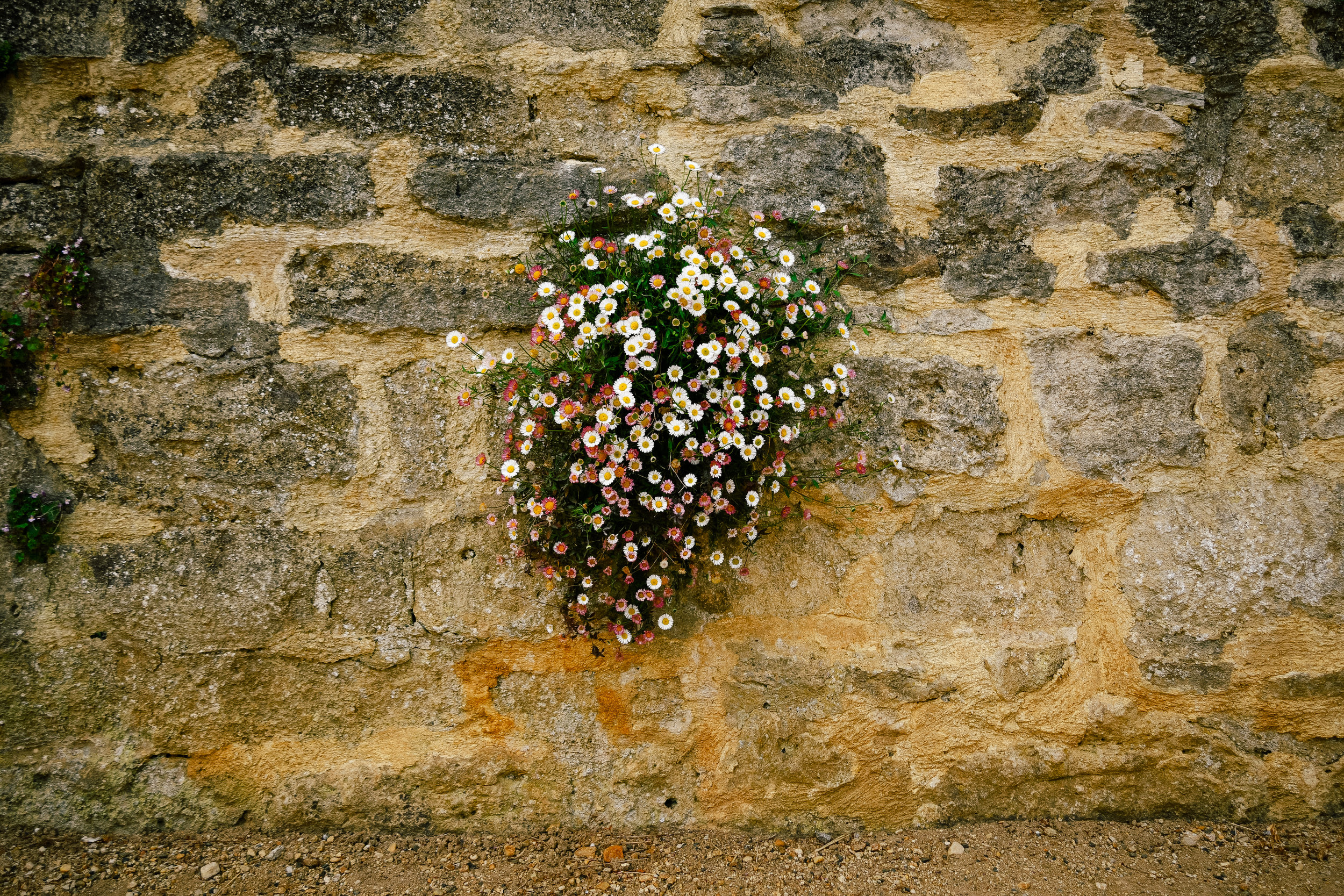 Flowers coming out of the cracks in the walls
