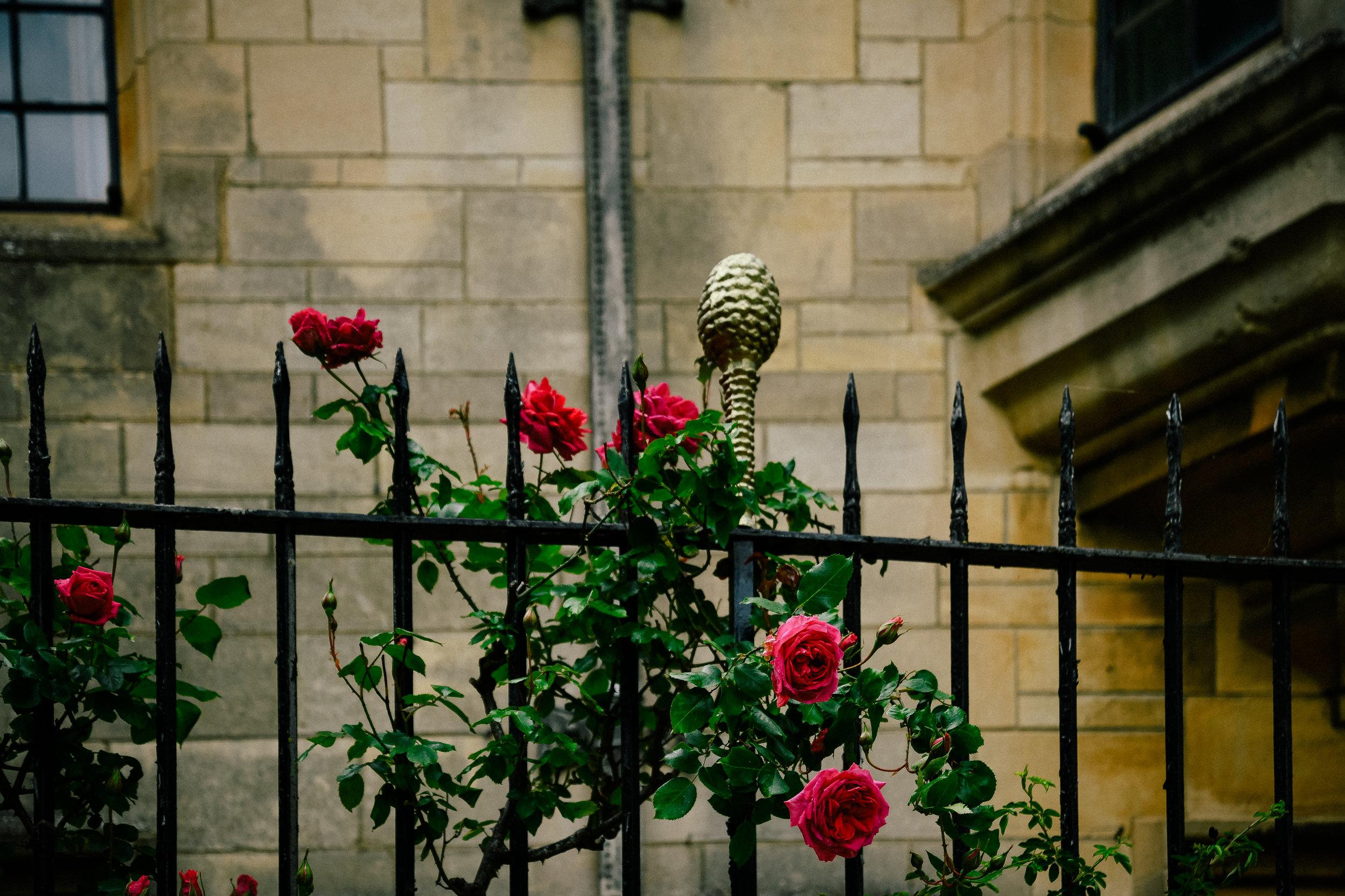 roses in oxford