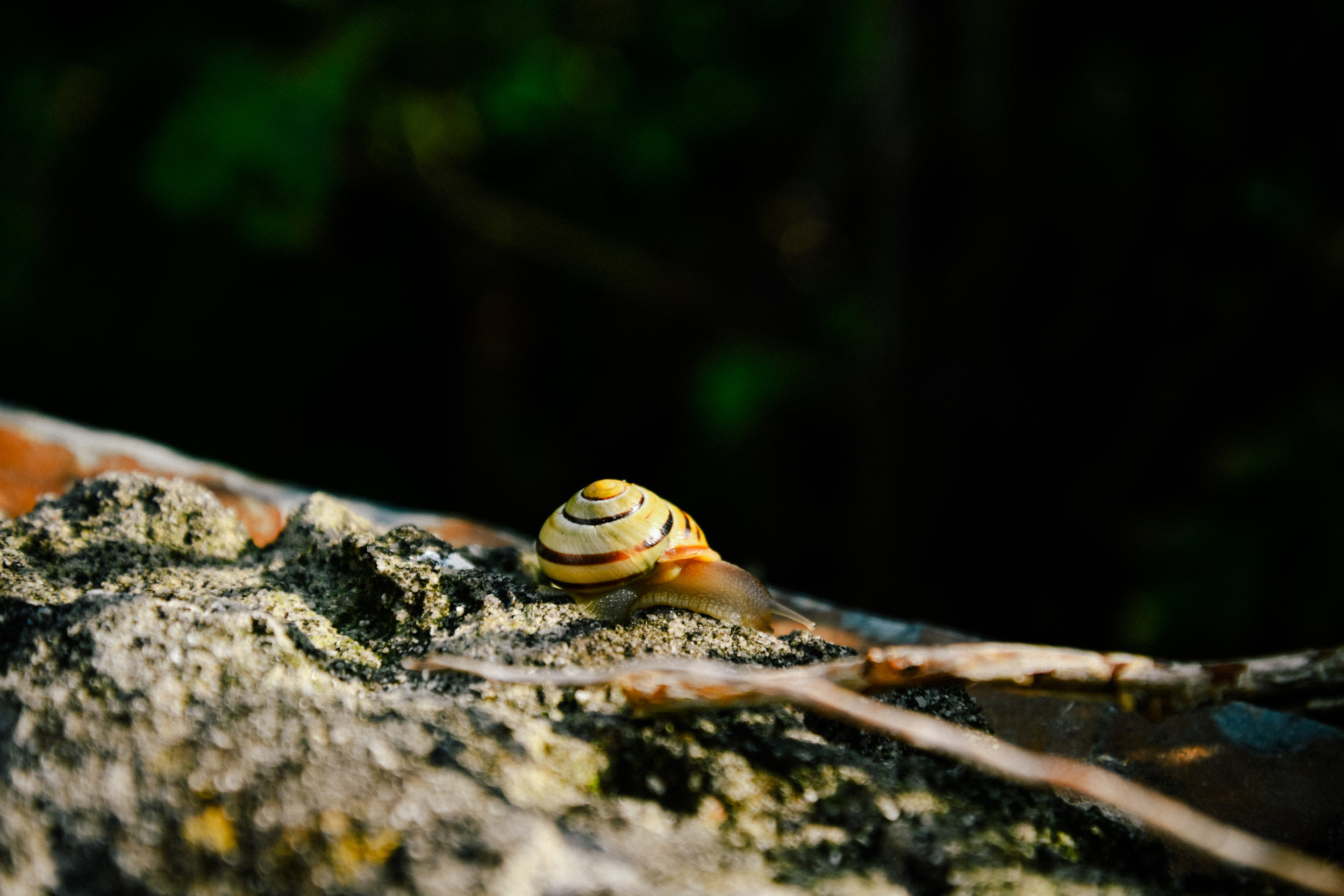 snail in port isaac