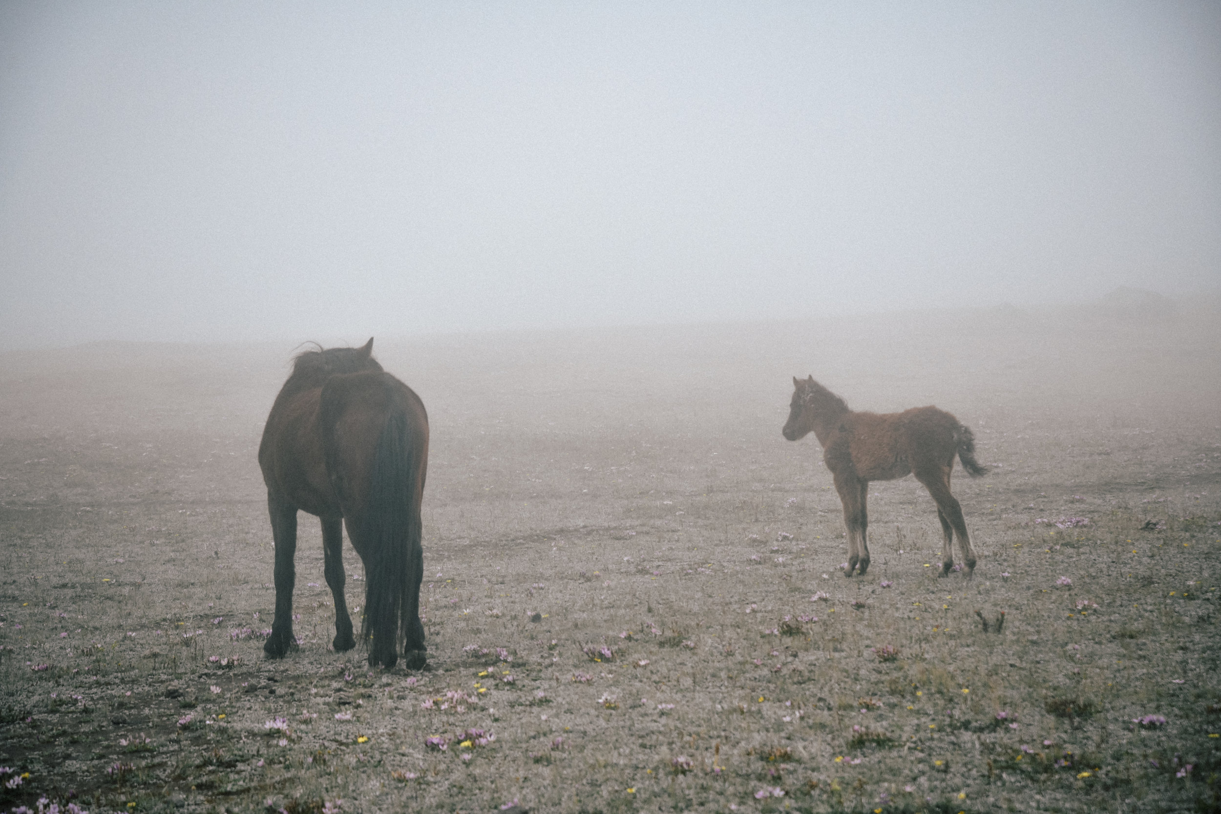 more wild horses in Cotopaxi
