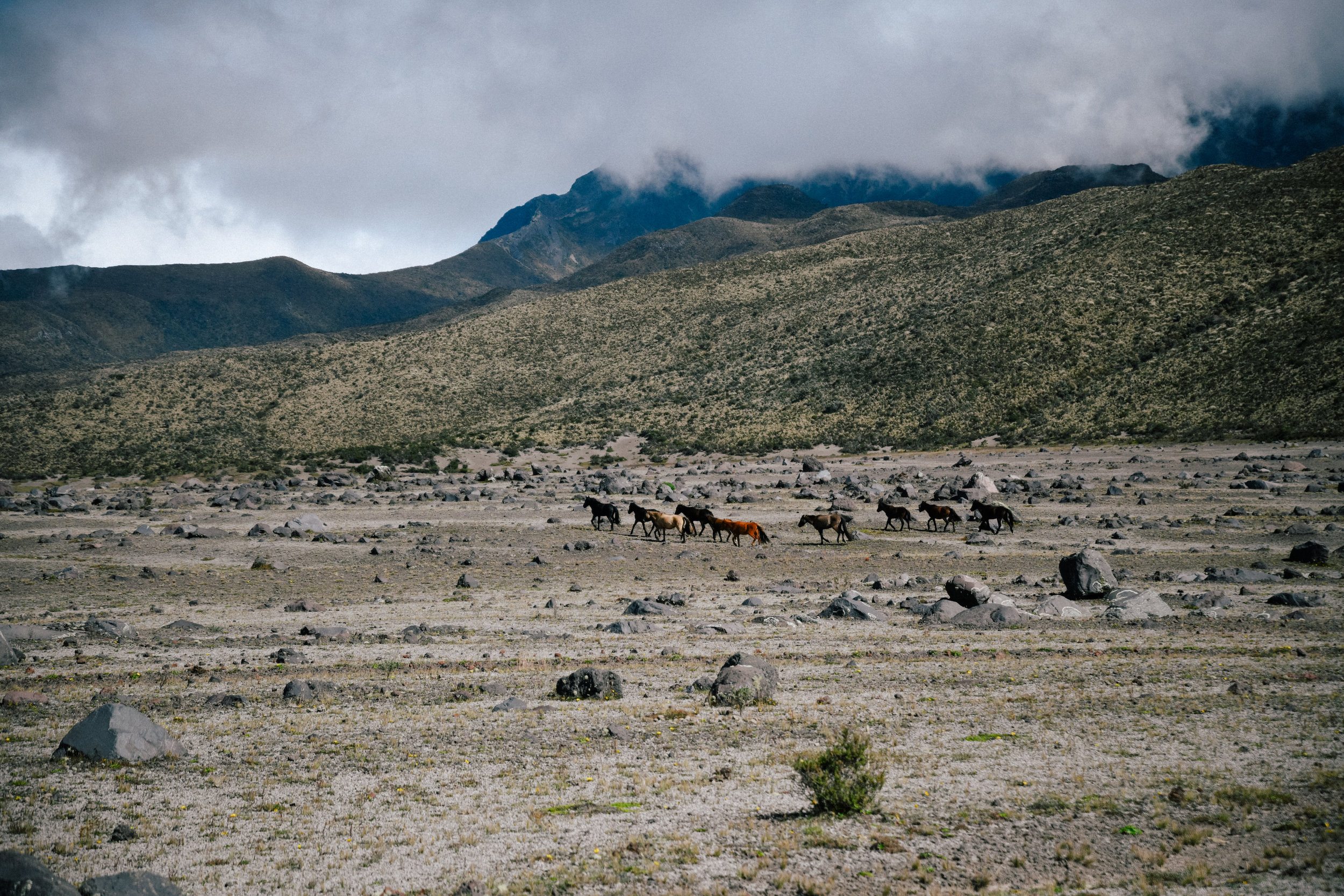 a clearer view of some wild horses
