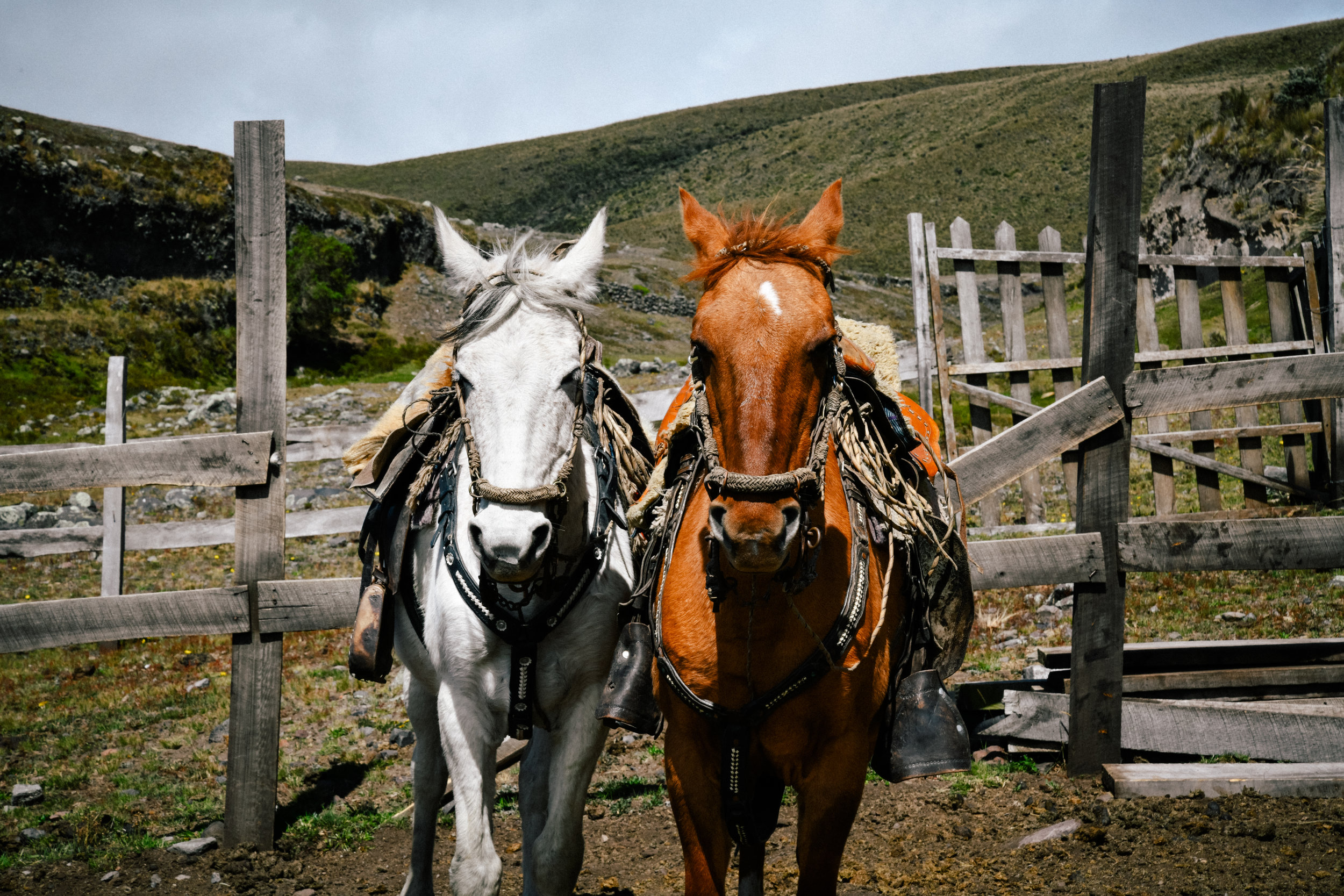 cotopaxi horses ready to go!