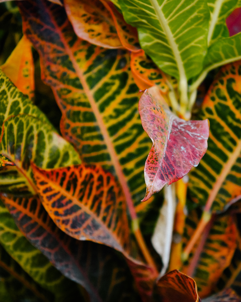 colorful leaves in the galapagos