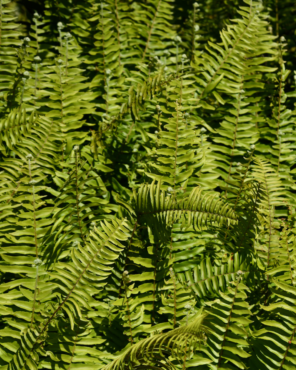 ferns in the galapagos islands