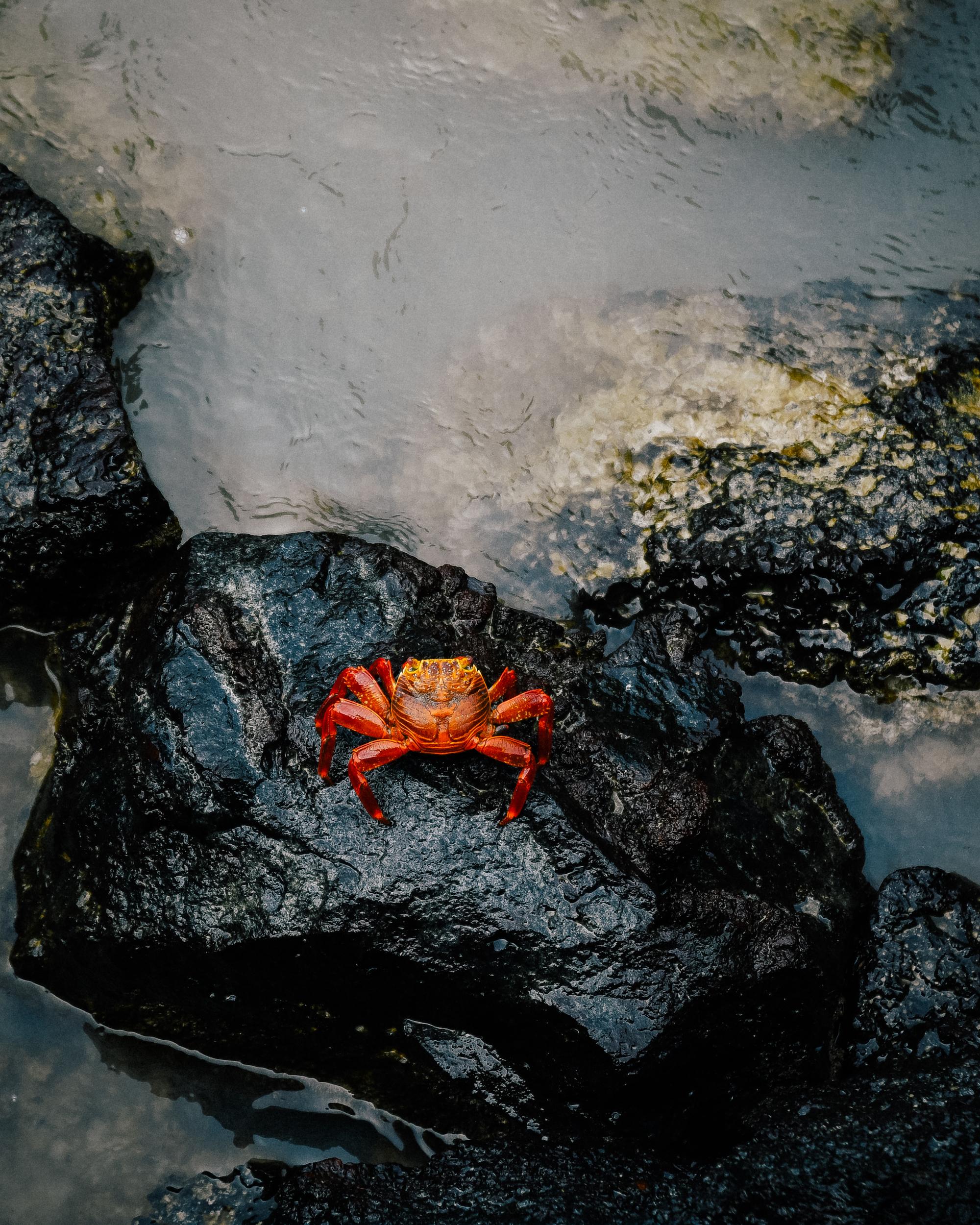 crab-beach.jpg