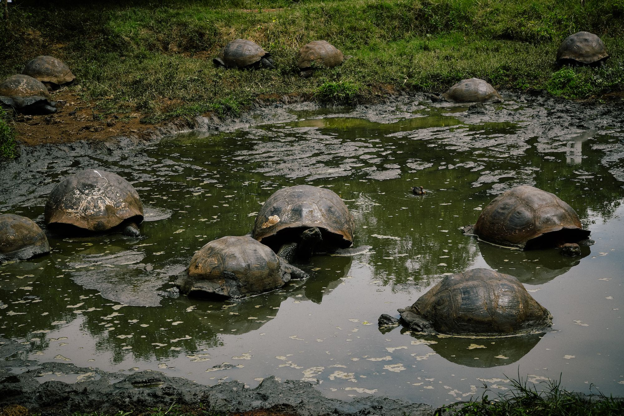 turtle shells floating in the galapagos