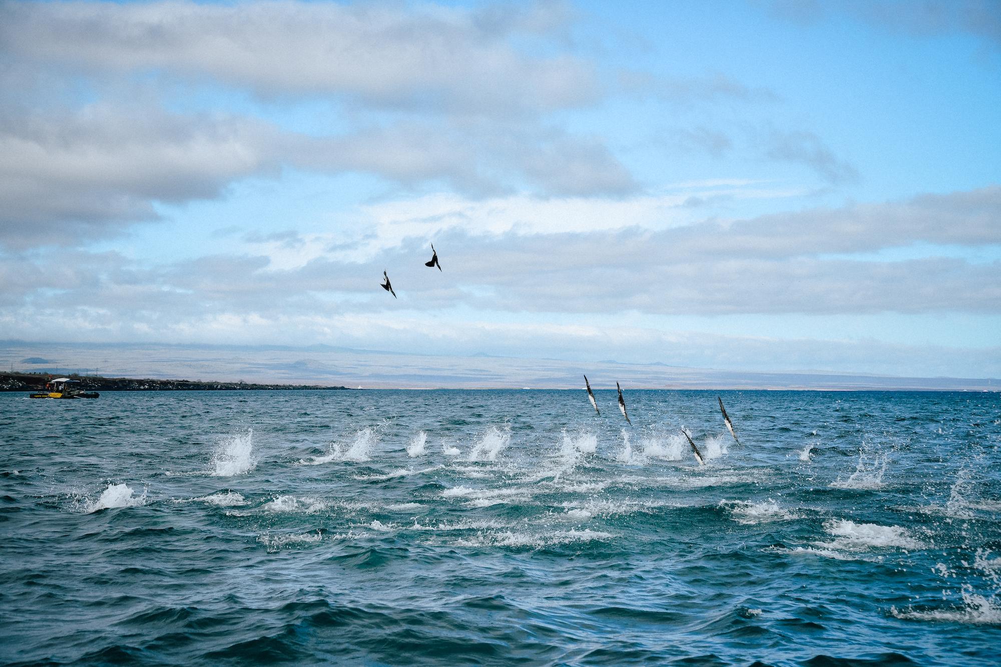 birds crashing while fishing