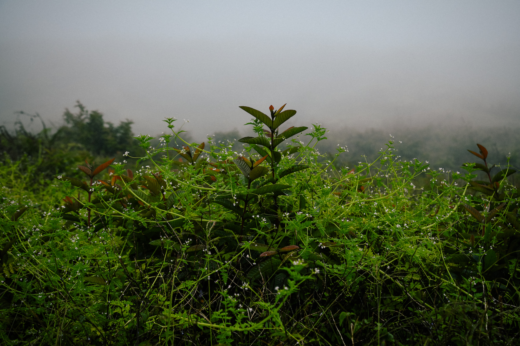 foggy morning plant in the galapagos