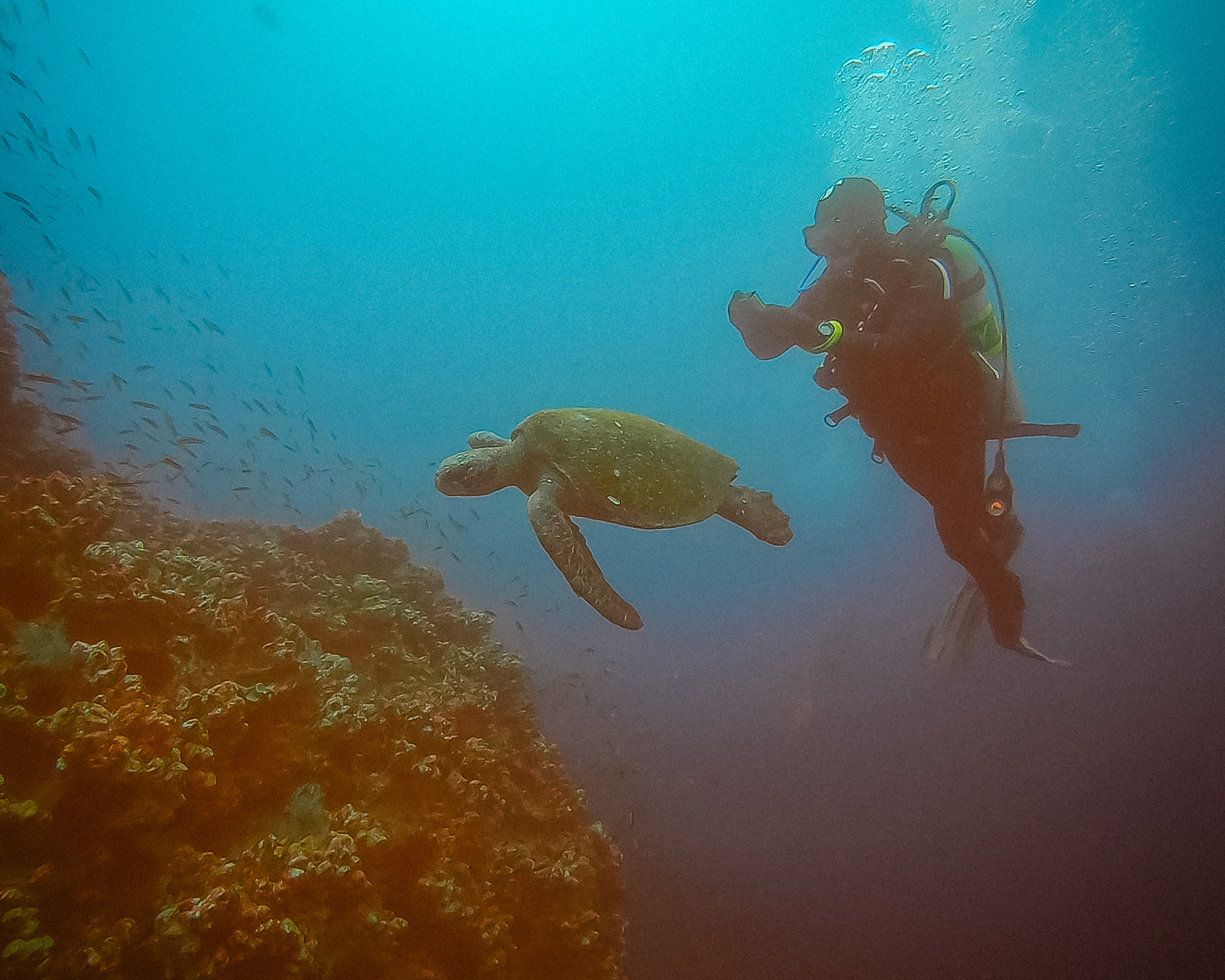 sea turtle in the galapagos islands gordon's rock dive