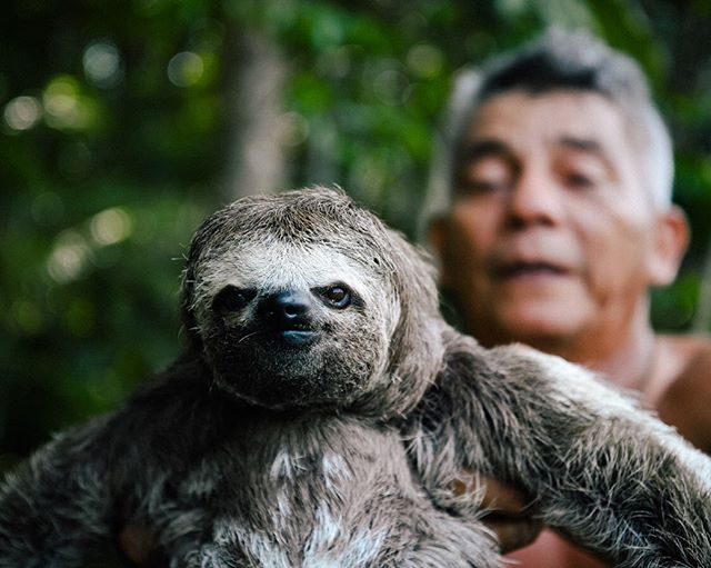 We went camping for five nights through the Amazon Rainforest. Lowlight: when I unknowingly pitched my hammock and mosquito net over a very active colony of red ants (and woke up  covered in them.) Highlight: all of the SLOTHS!