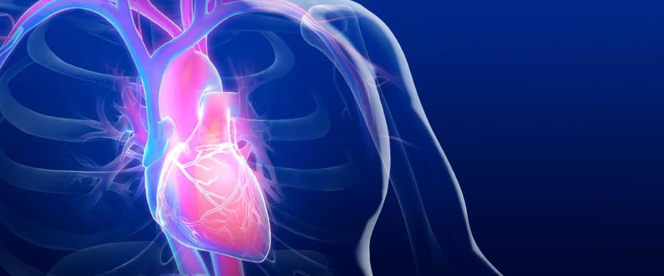 cardiovascular-research-center-main-12col.jpg