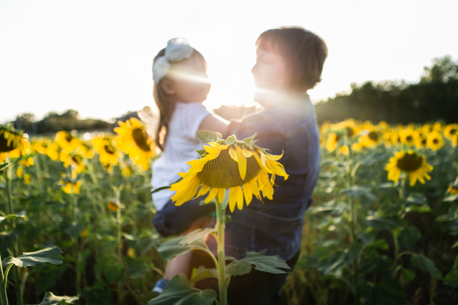 Fall Family Photos with Grandmother and granddaughter in the sunflower field with lens flare at Britt's Farm and Garden Acres in Manhattan, Kansas. Captured by photographer, Renee McDaniel.