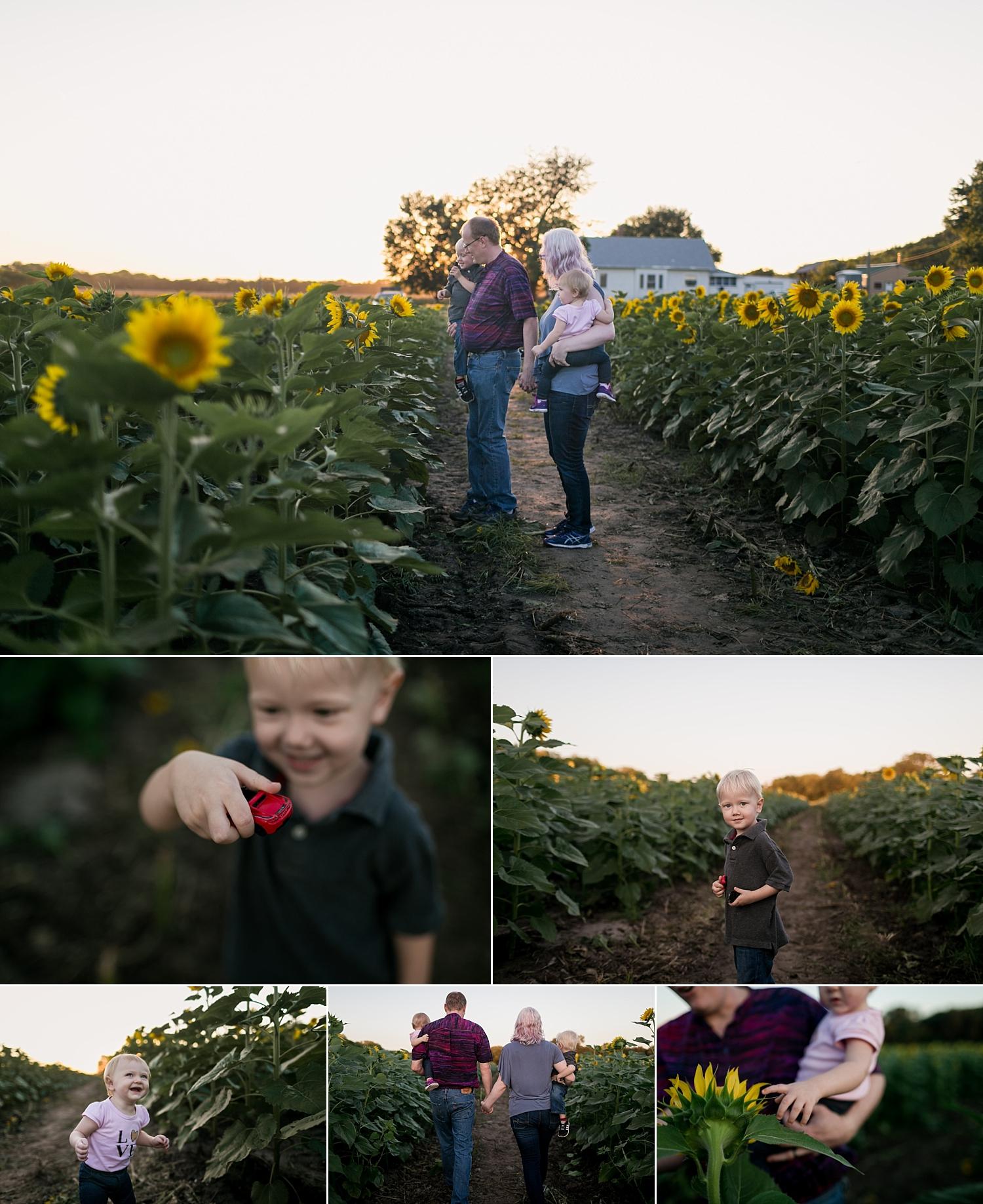 Britts-Farm-Family-of-four-Sunflower-Mini-Photo-Session-Manhattan-KS